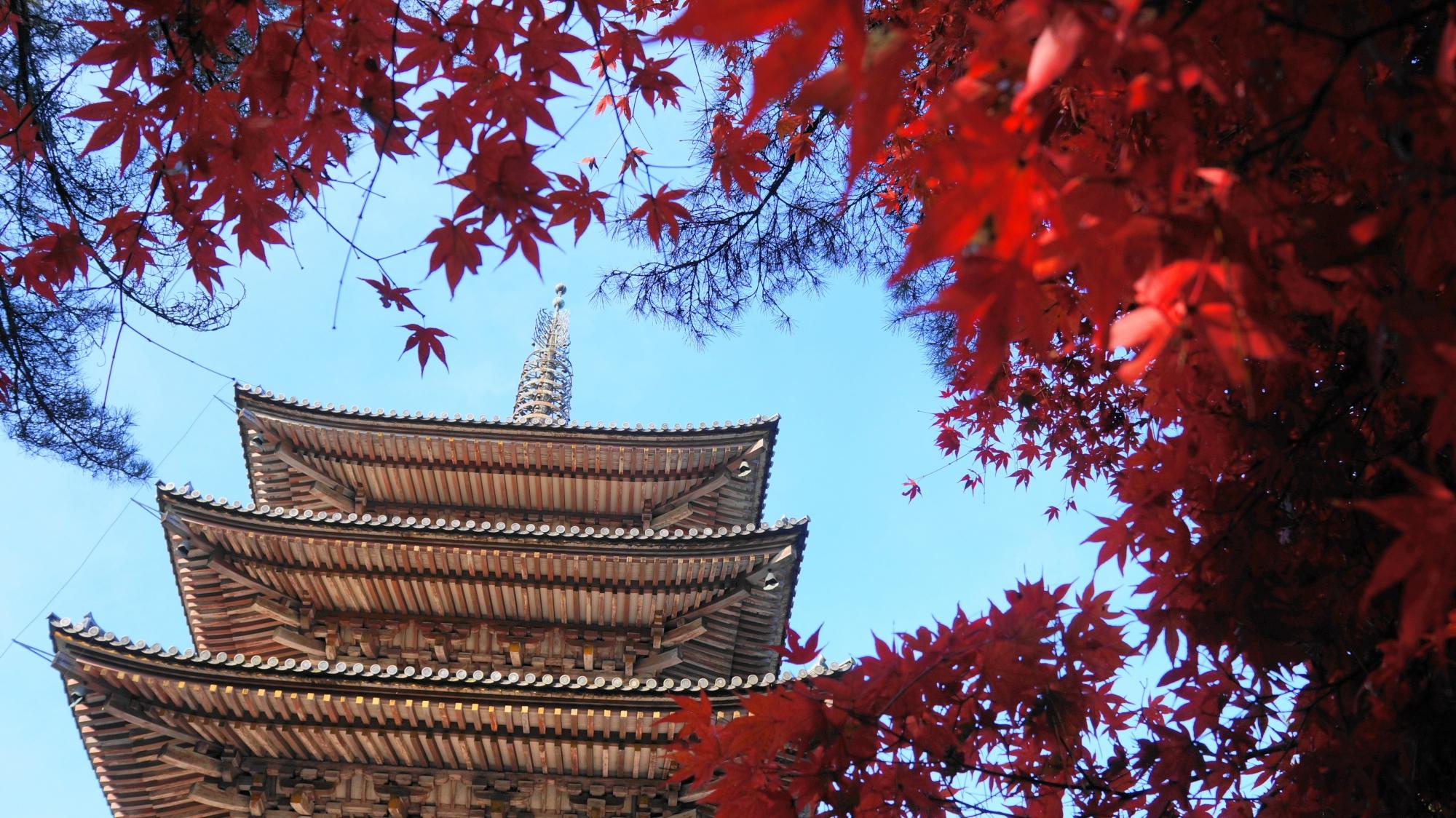 五重塔をつつみこむ真っ赤な紅葉