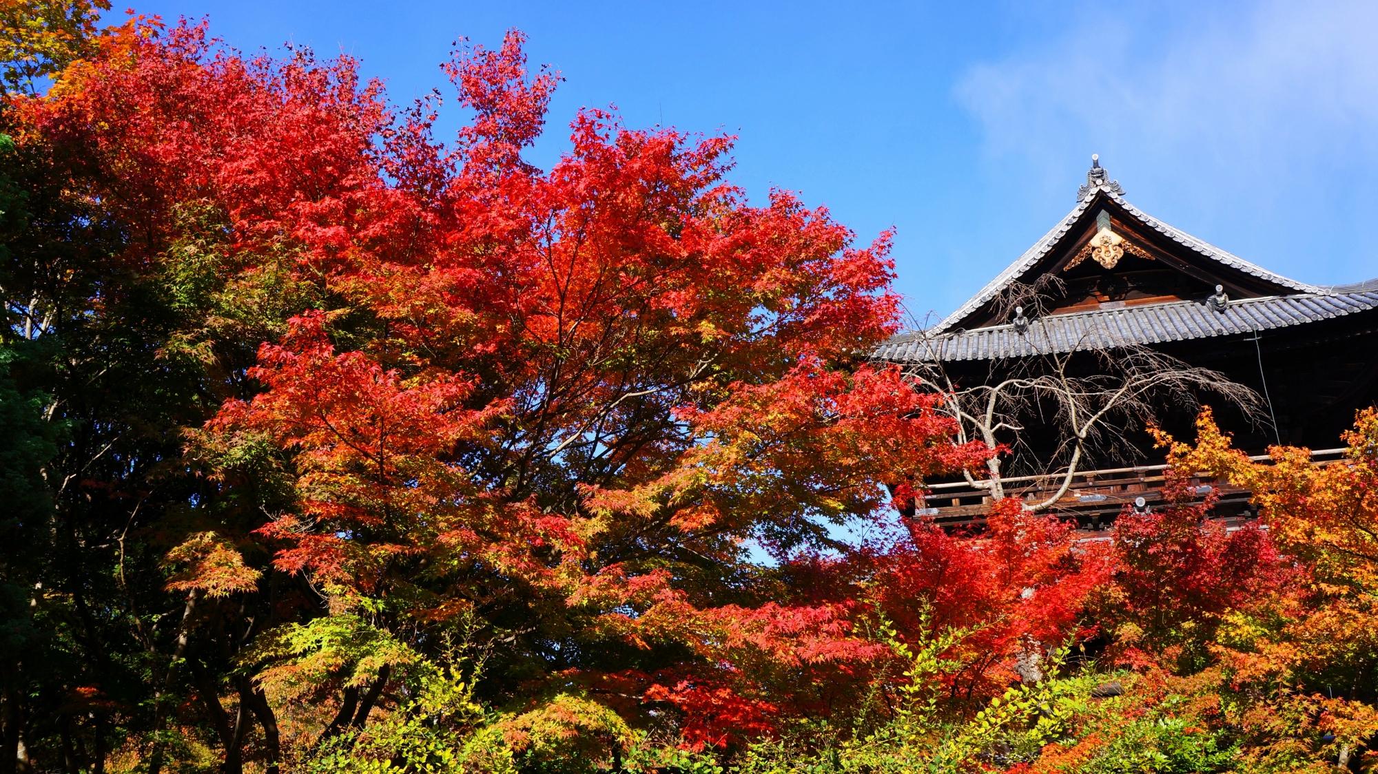 青空と巨大な三門を彩る鮮やかな赤い紅葉
