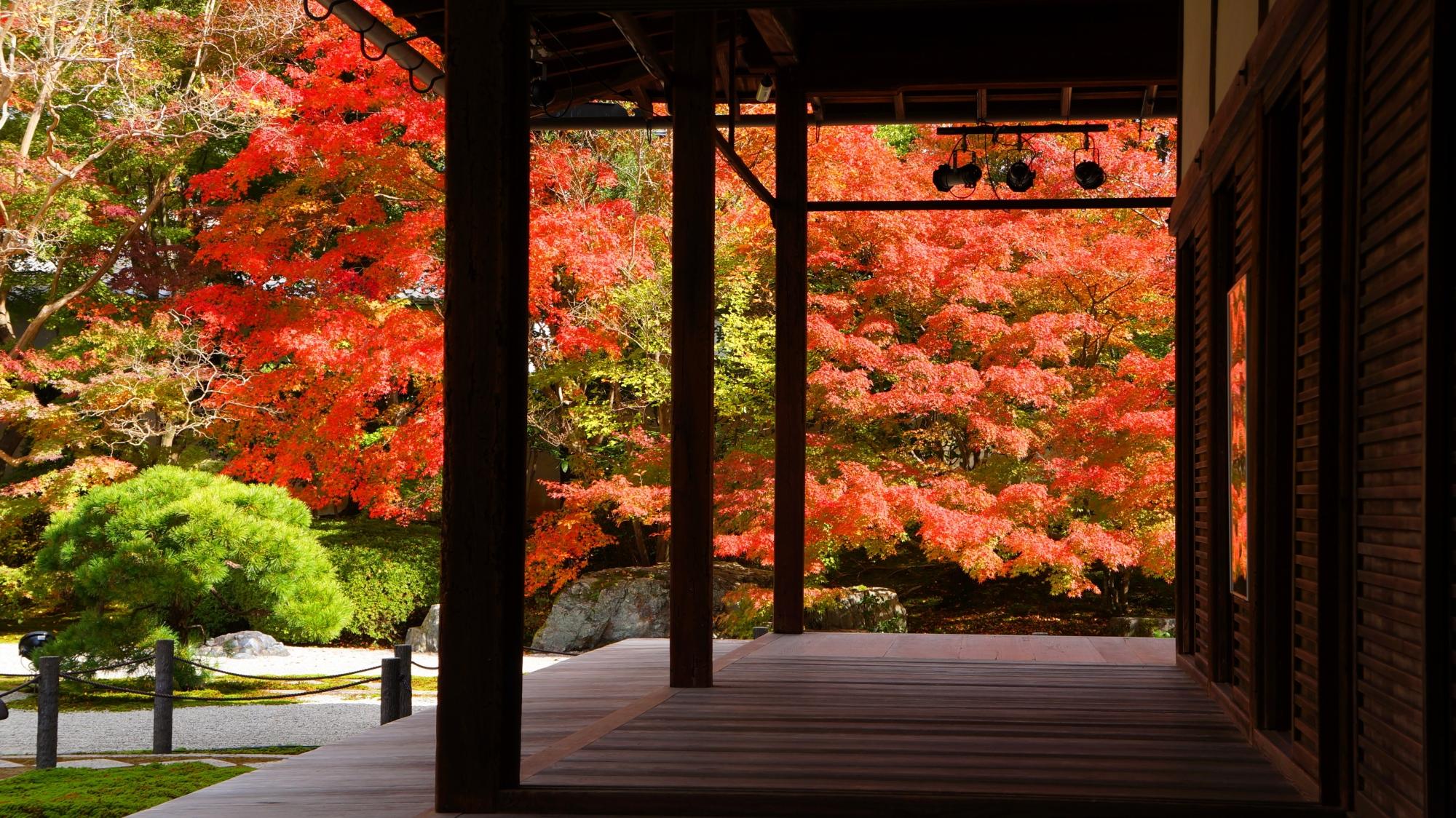 天授庵の本堂の裏手から眺めた庭園の溢れる紅葉