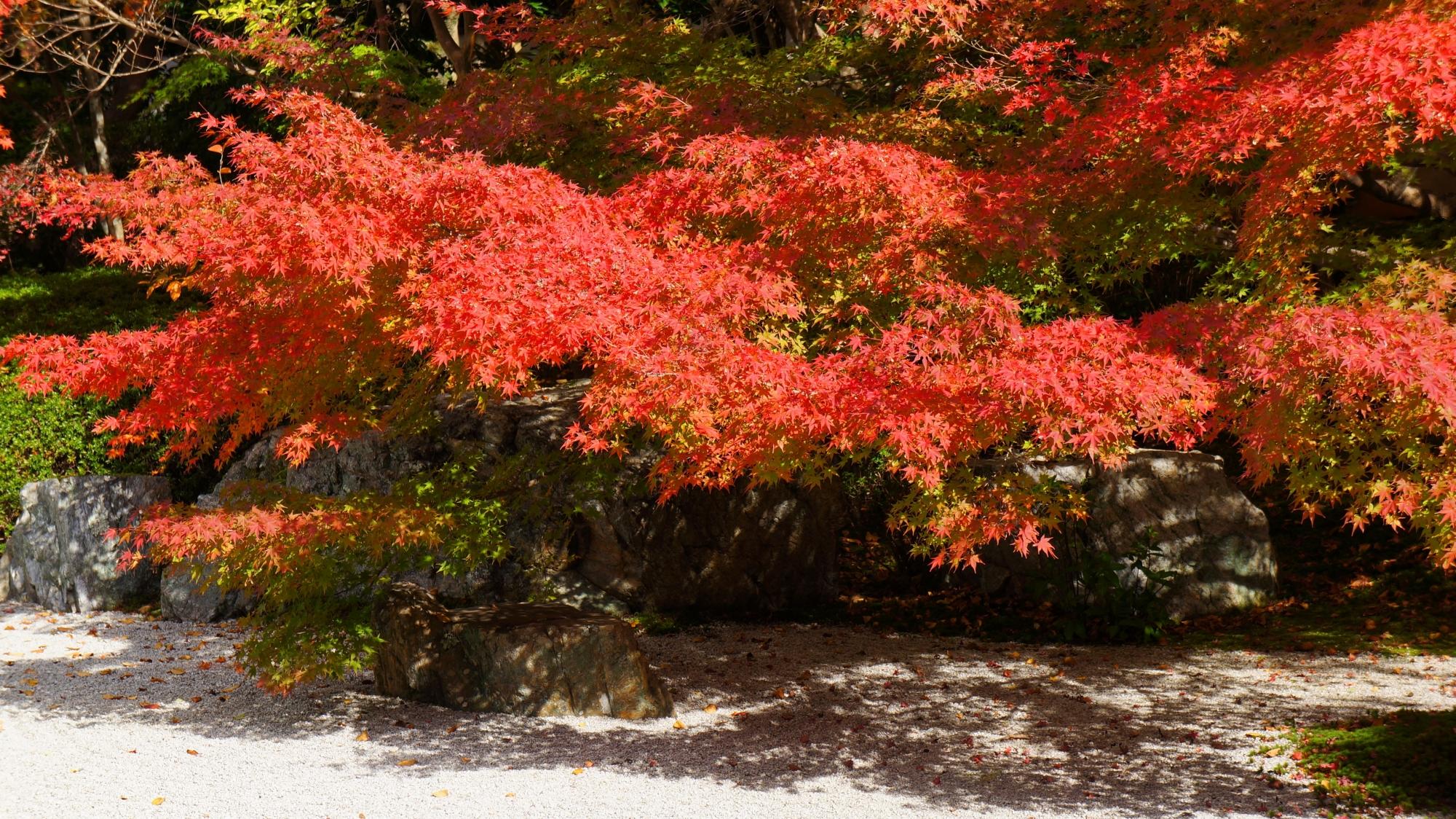 京都でも早く紅葉が始まる名所の天授庵