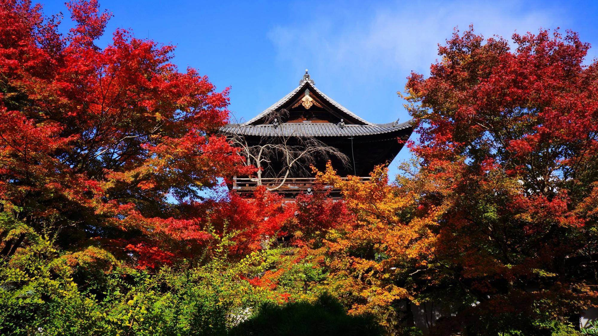 天授庵から眺めた南禅寺三門と真っ赤な紅葉