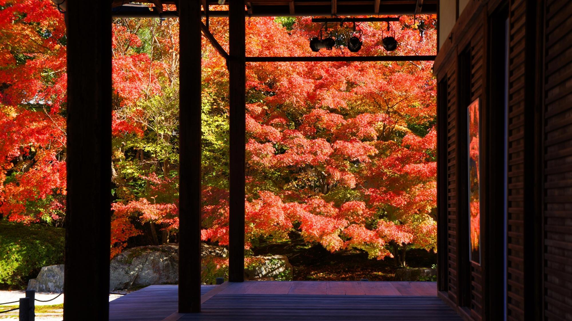 日を浴びて煌く豪快な秋色の紅葉