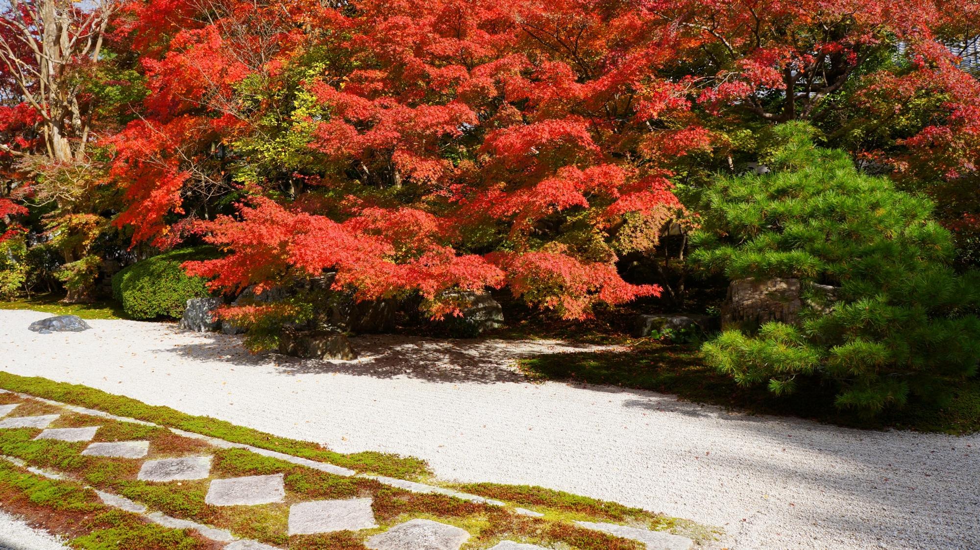松や苔などの綺麗な緑と紅葉の赤との見事なコントラスト