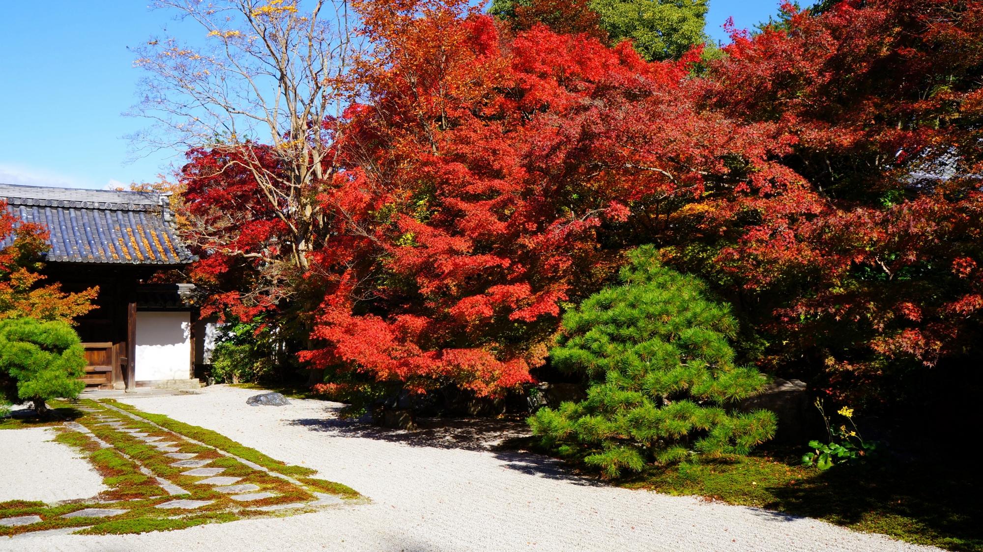 天授庵の素晴らしい真っ赤な紅葉と情景