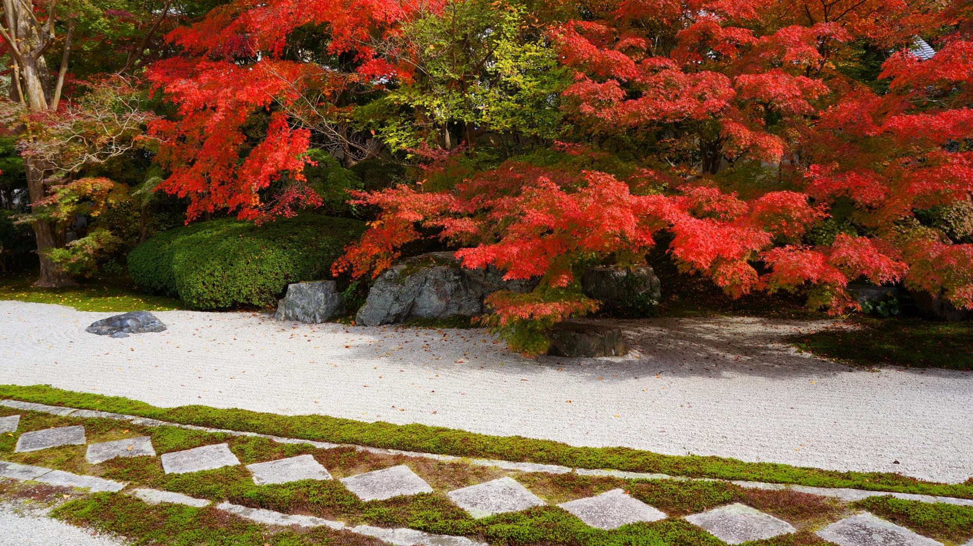 天授庵の特徴的な飛び石と苔の参道を華やぐ真紅の紅葉