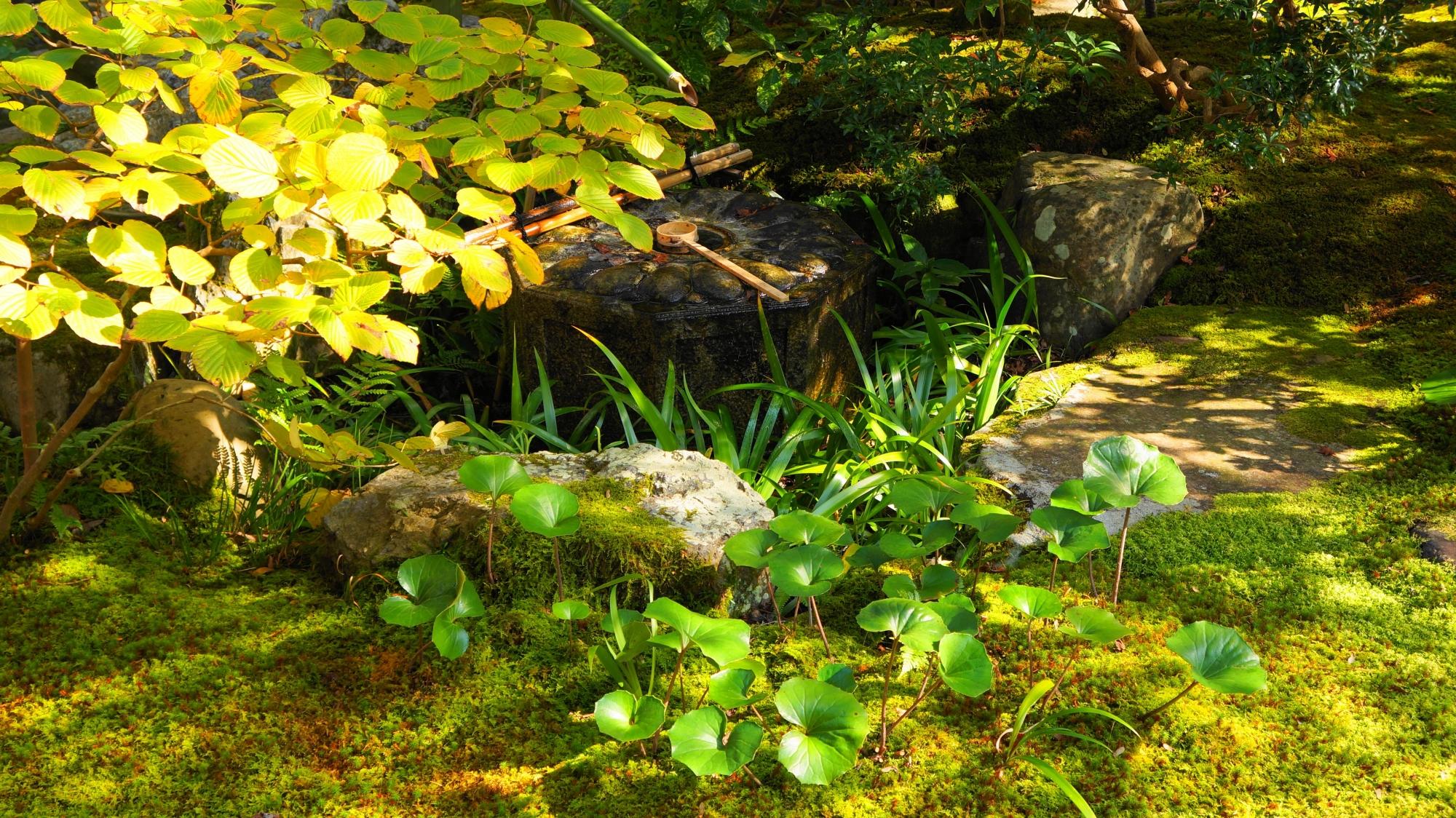 良く手入れされた美しい苔や緑