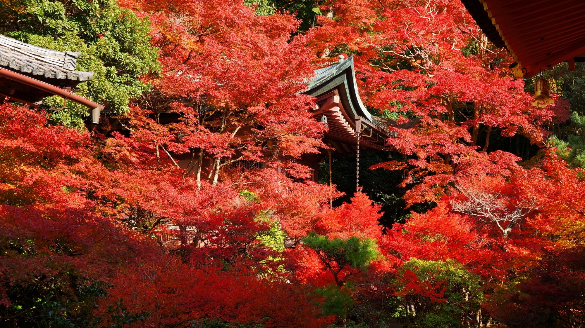本堂から眺めた毘沙門堂の高台弁才天と真っ赤な紅葉