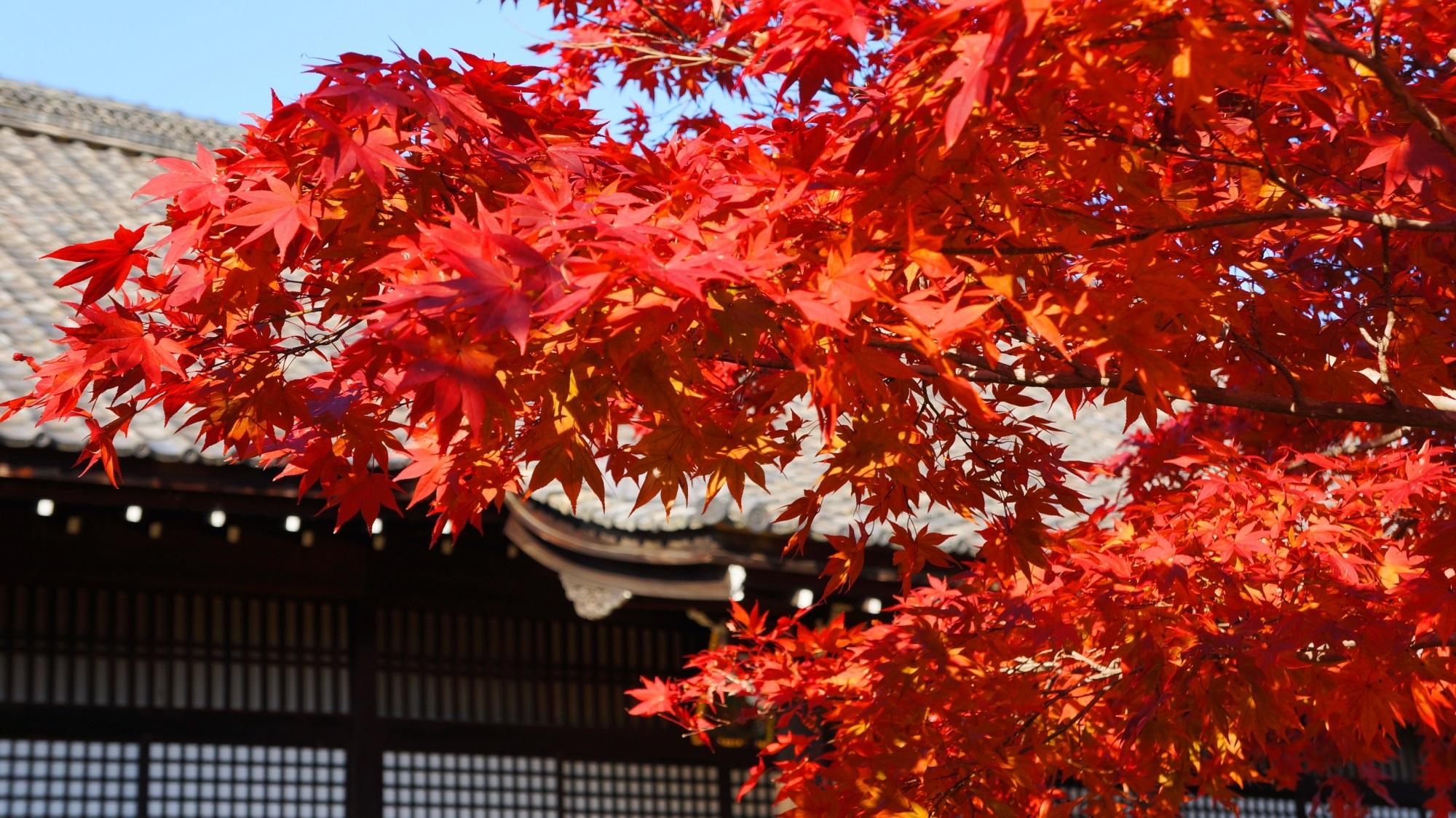 京都山科の紅葉の穴場の勧修寺