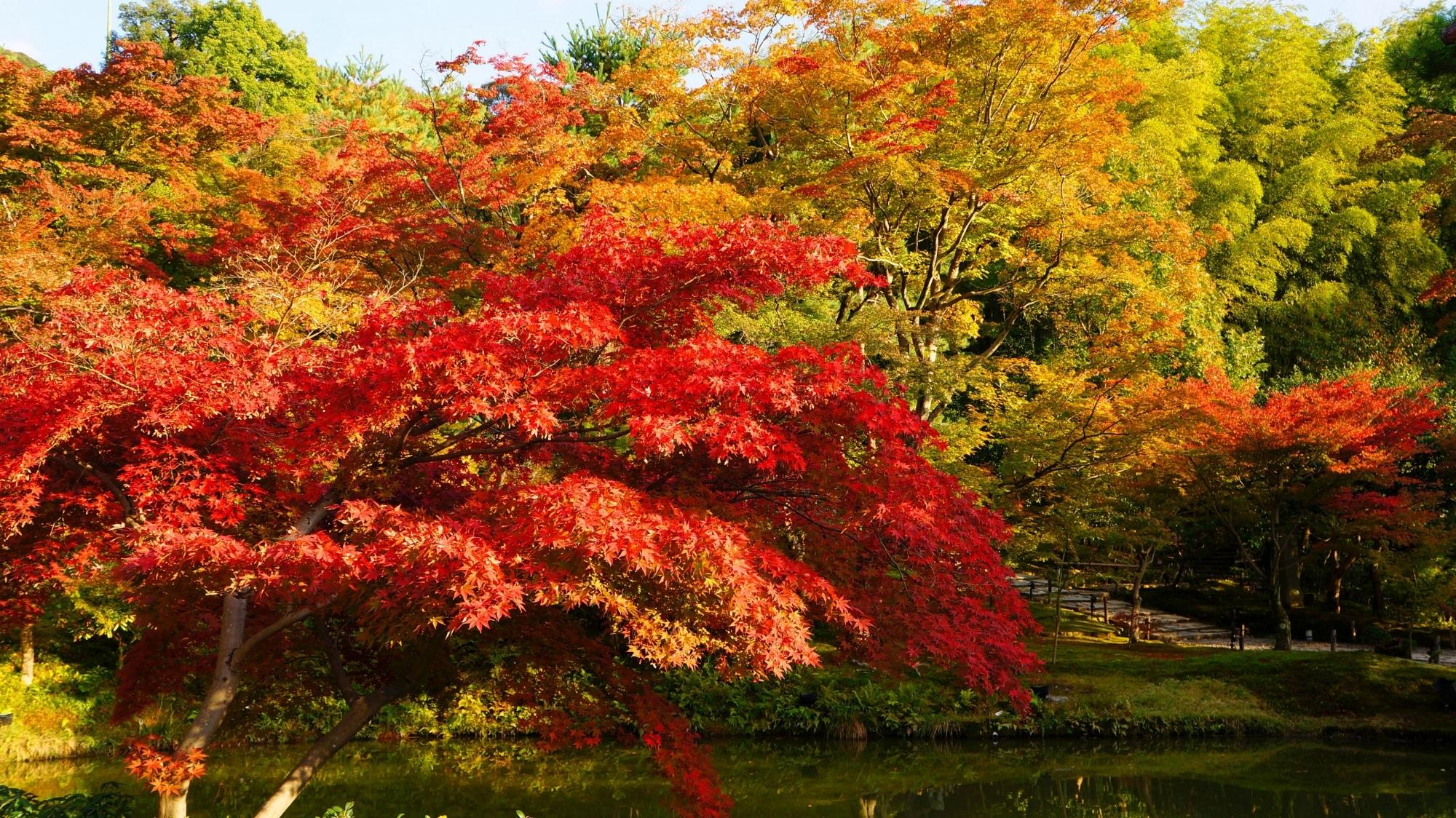 高台寺 紅葉 京都の夕陽と鮮やかな紅葉