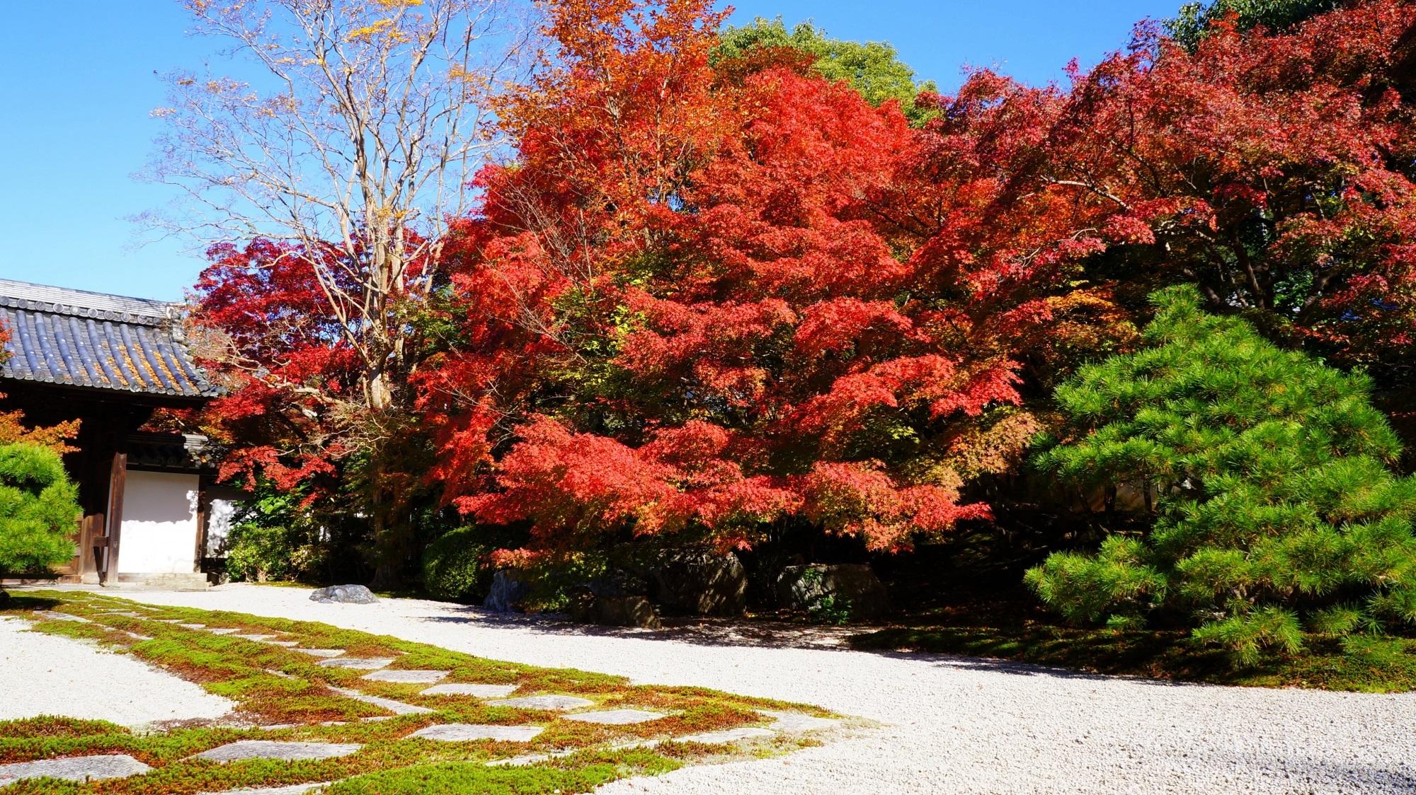 真っ先に真っ赤に色づく紅葉