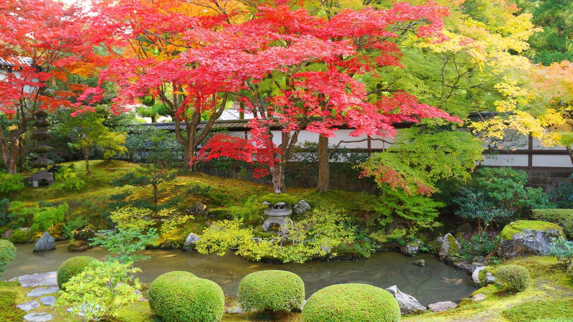 優雅に色づく紅葉