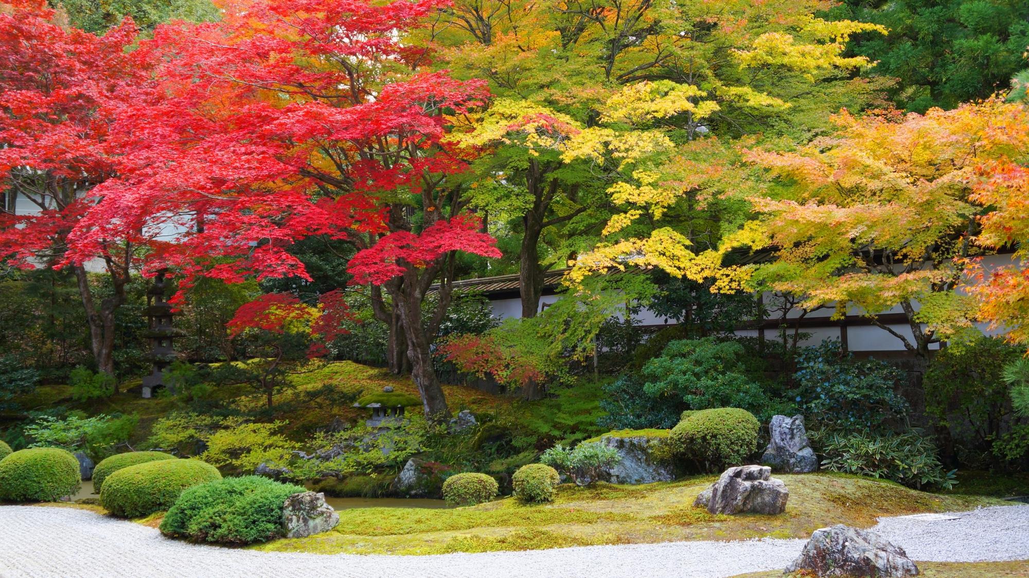 高画質 泉涌寺庭園 紅葉 写真