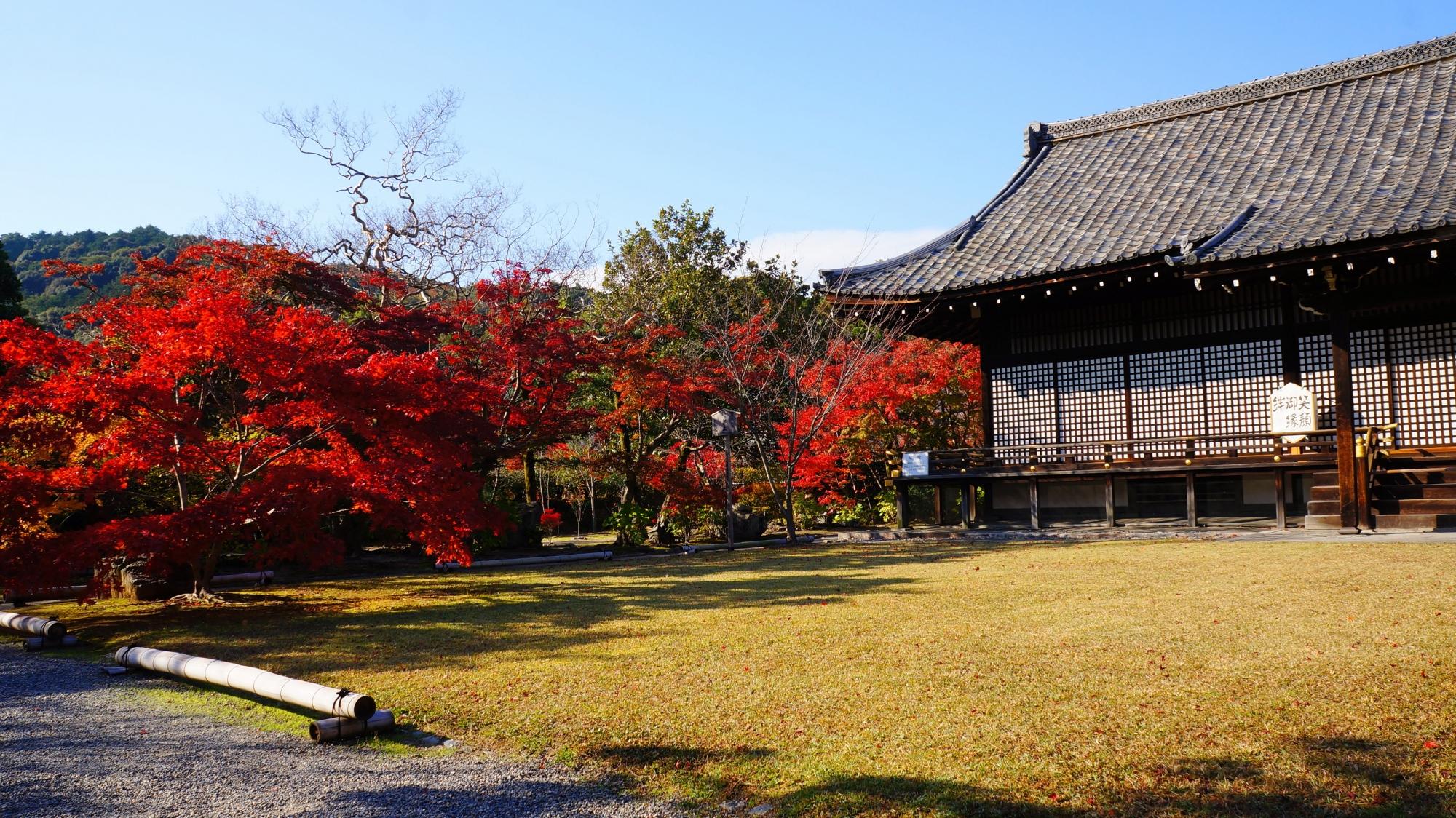 宸殿と境内を彩る見事な紅葉