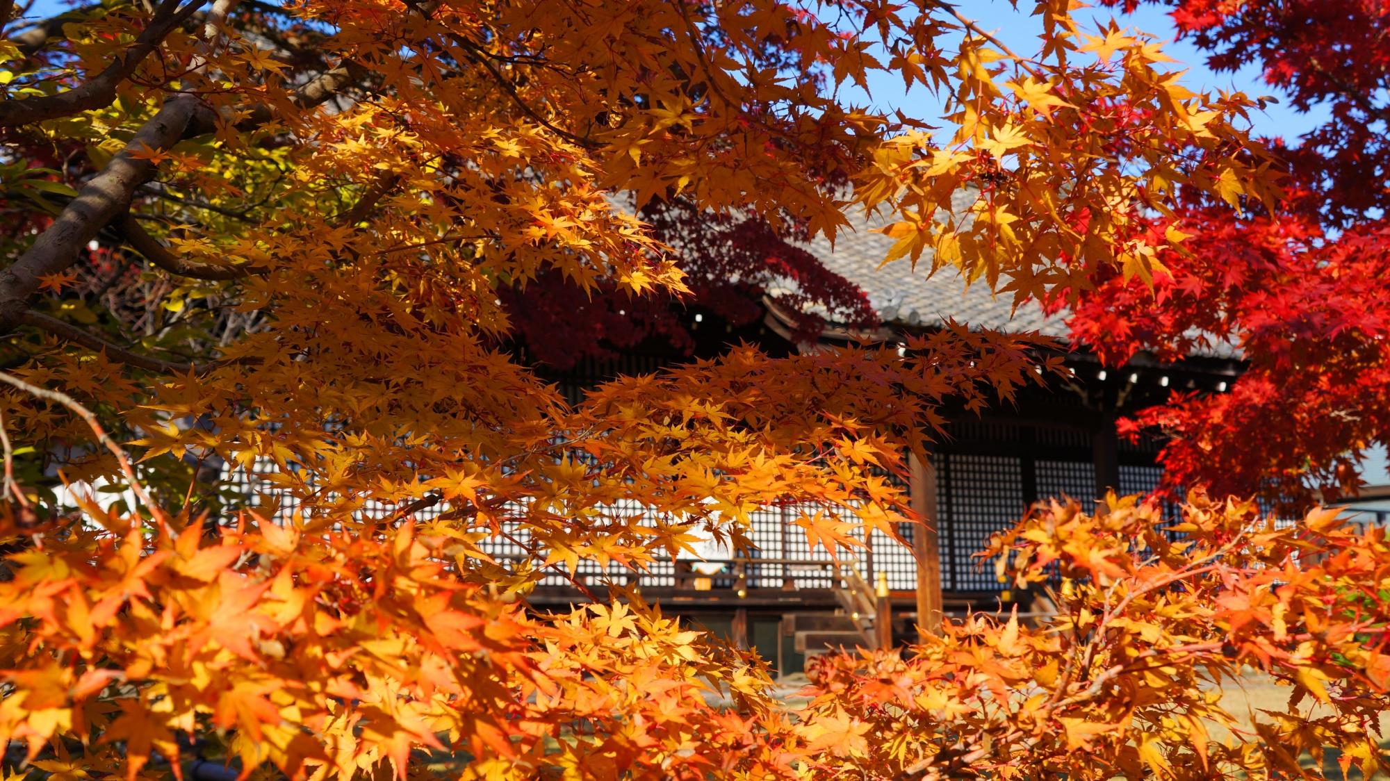 勧修寺の華やかなオレンジ色の紅葉