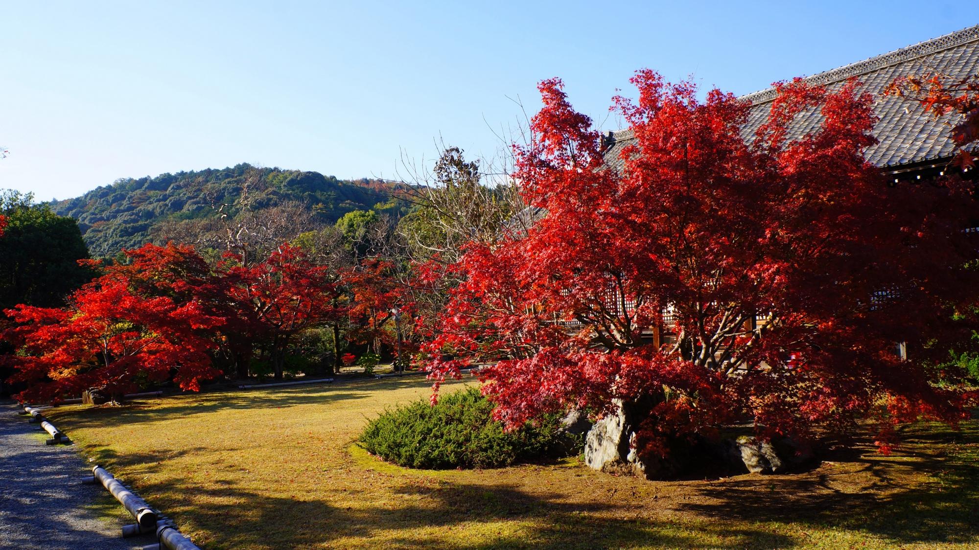 勧修寺の燃え上がるような真っ赤な紅葉