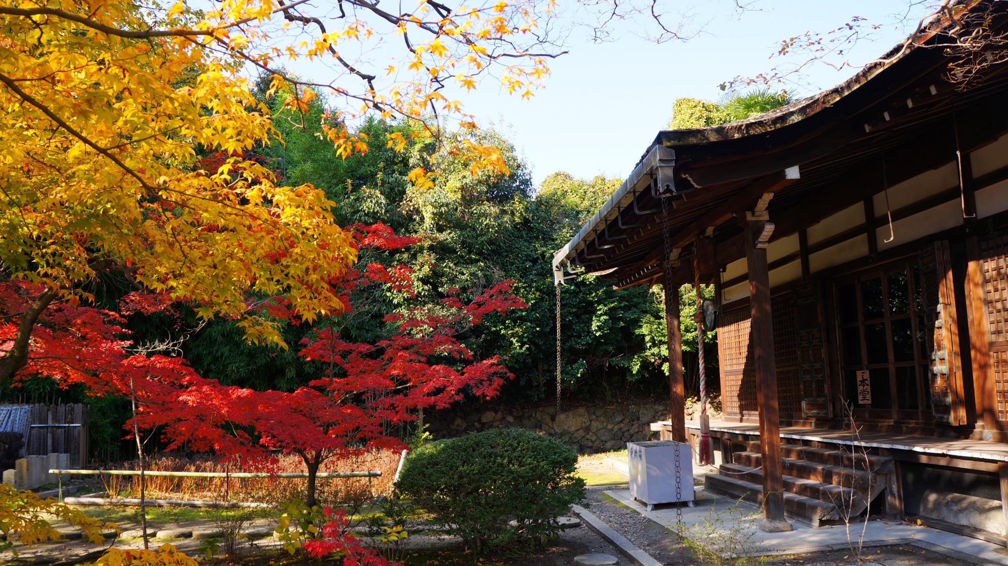 勧修寺の本堂前の赤色や黄色の華やかな紅葉