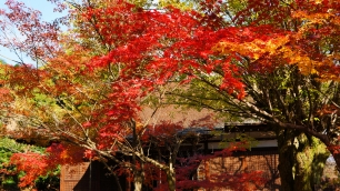 Colored leaves Kajyuji-Temple Kyoto 見ごろ 紅葉 かじゅうじ