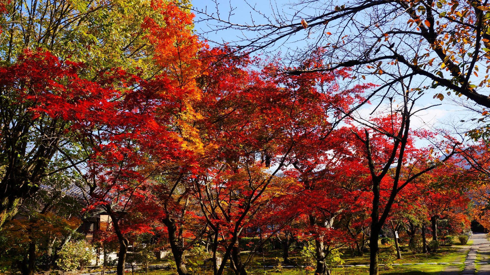 勧修寺の本堂前を覆う圧巻の紅葉