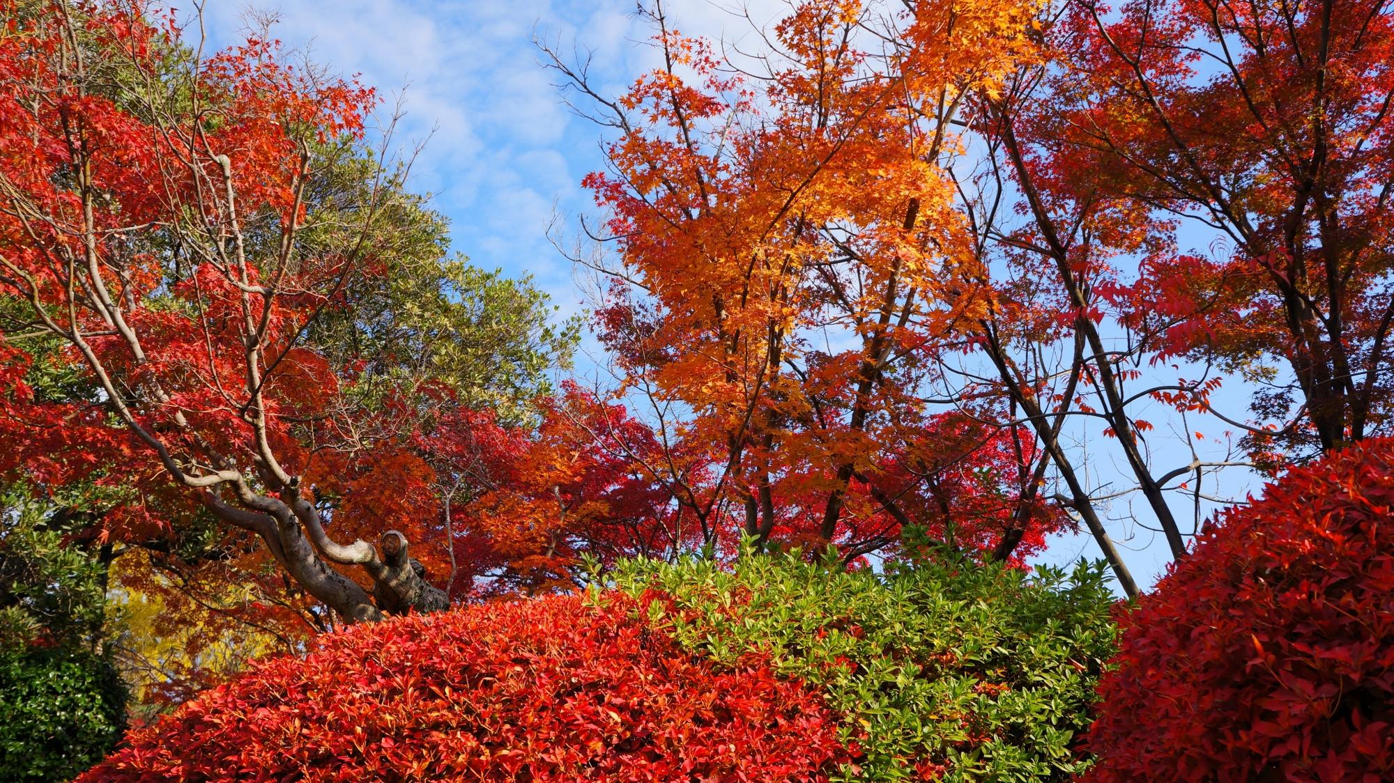 勧修寺の色とりどりの庭園