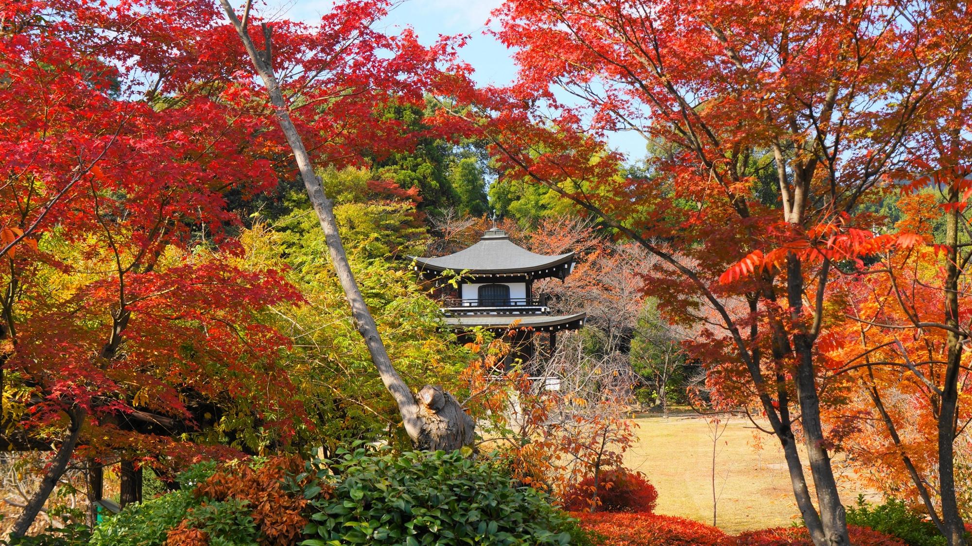 勧修寺の観音堂をつつみこむ紅葉