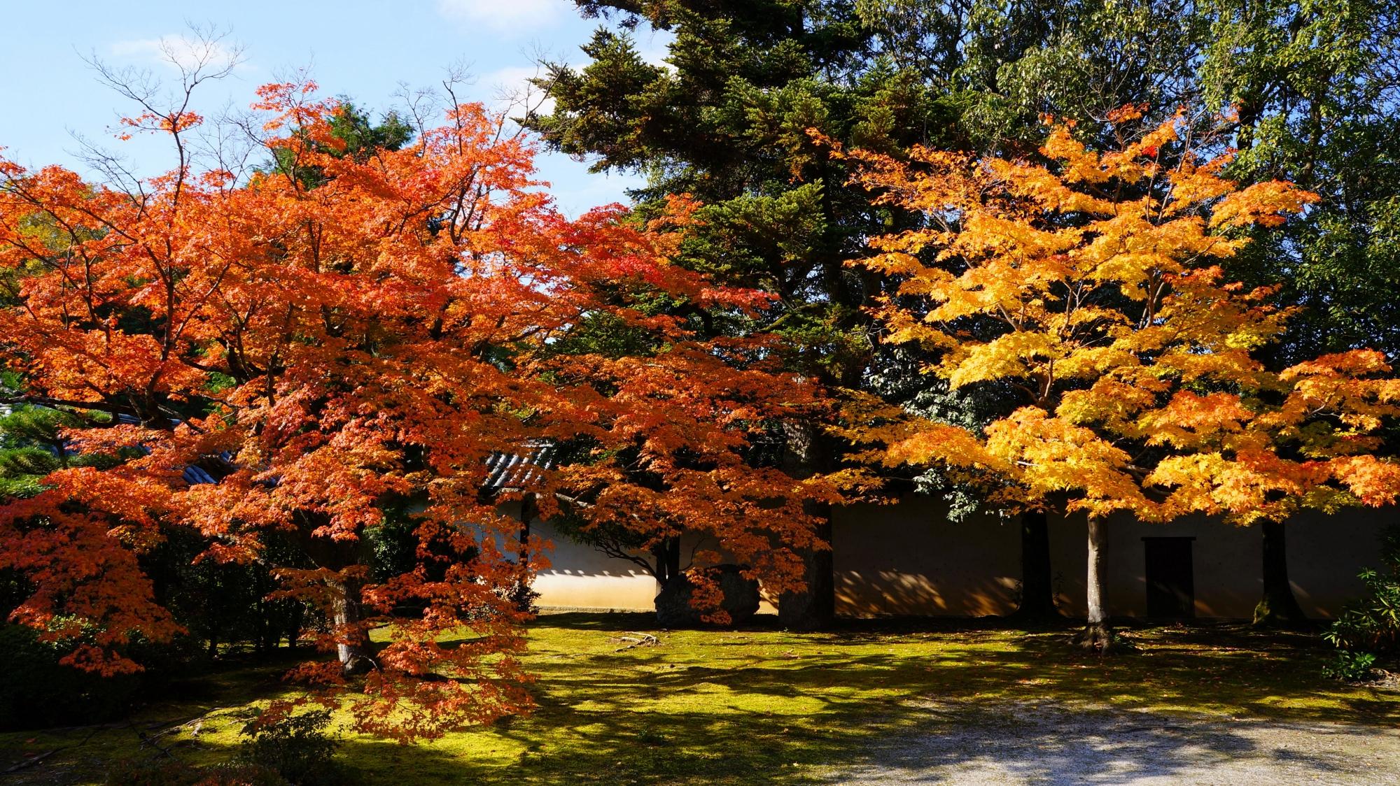 随心院の庫裡前の多彩な紅葉