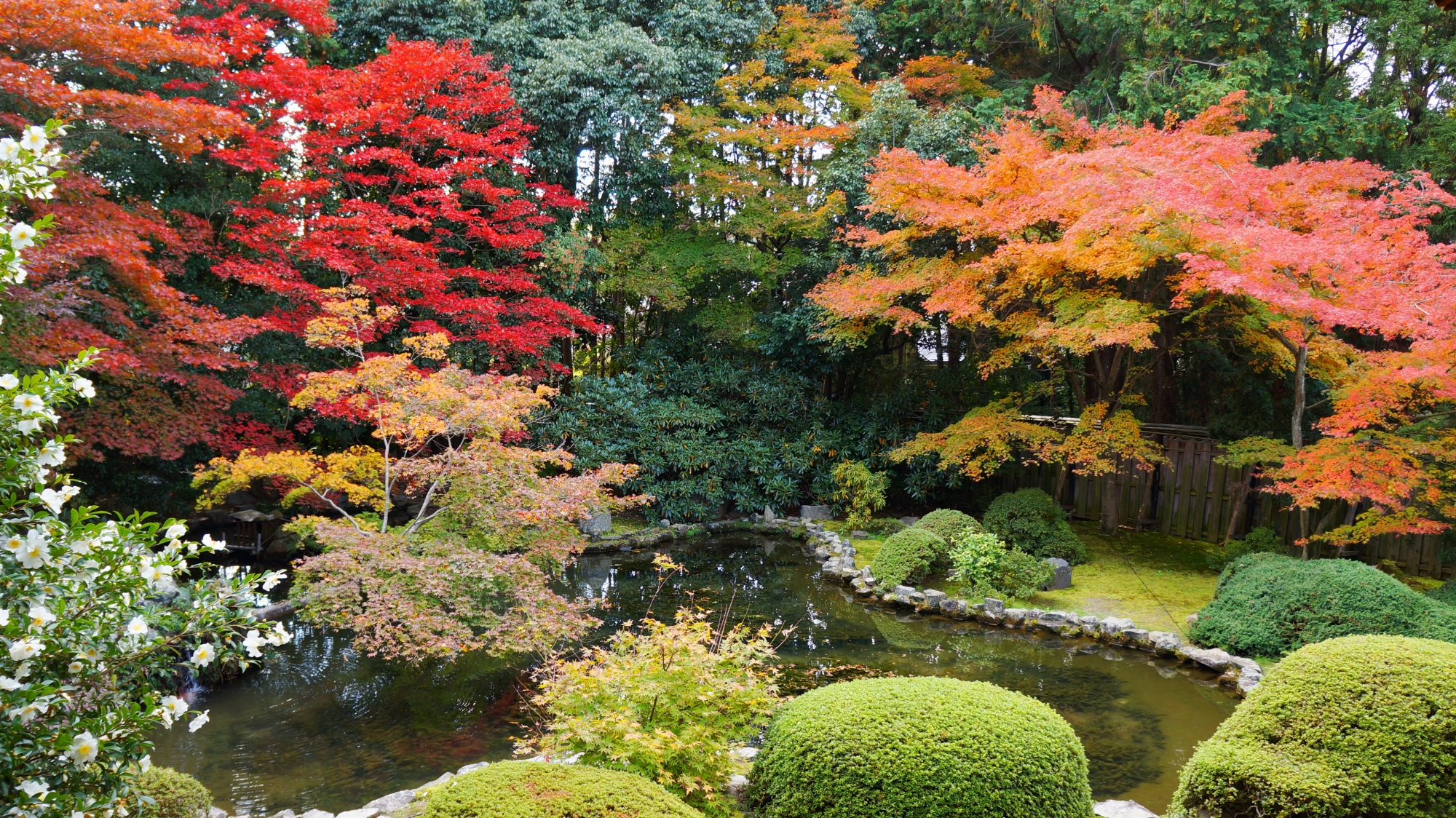 本堂横の池と水辺を彩る秋色の紅葉