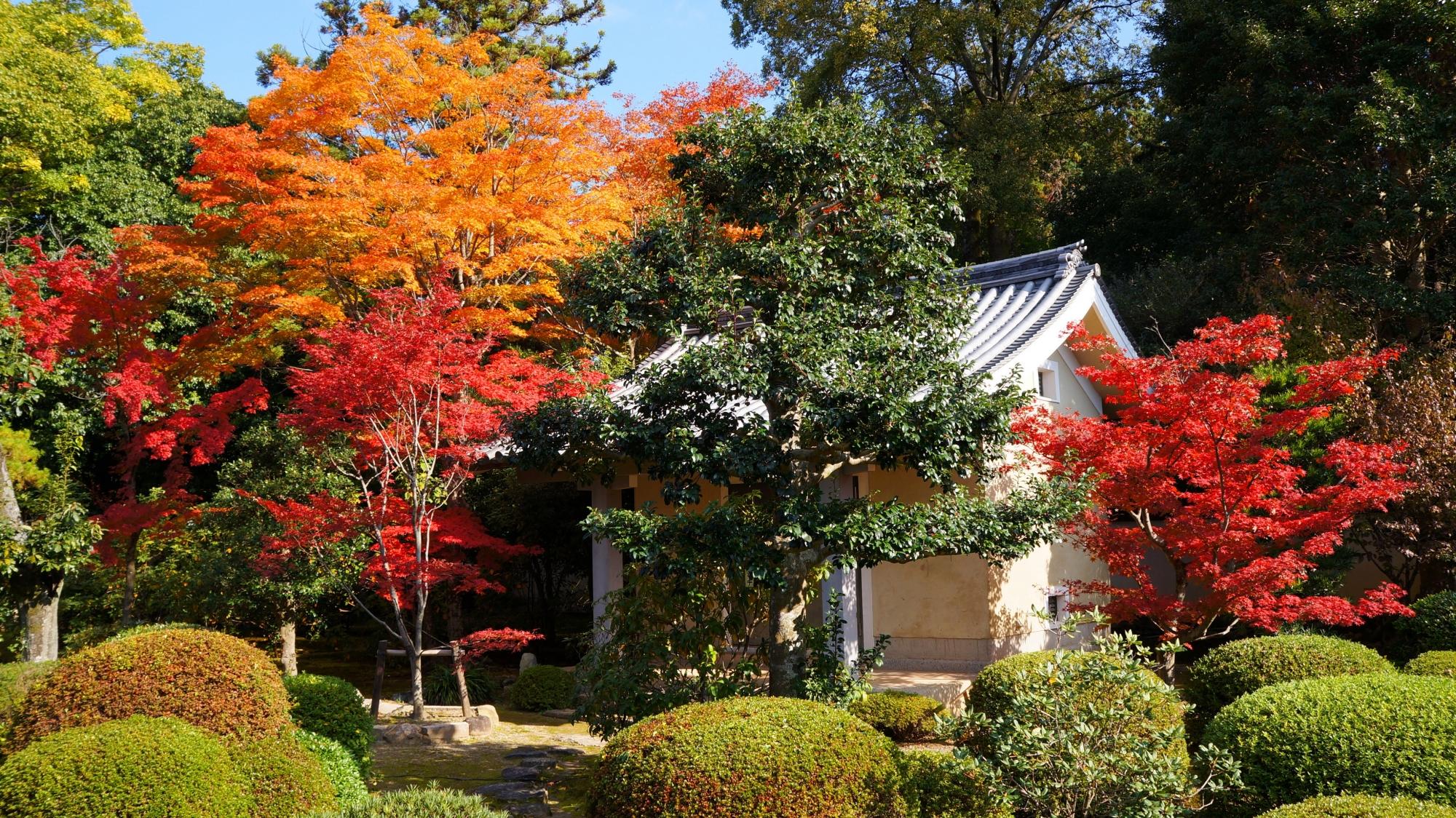 小野小町ゆかりの山科の紅葉の穴場