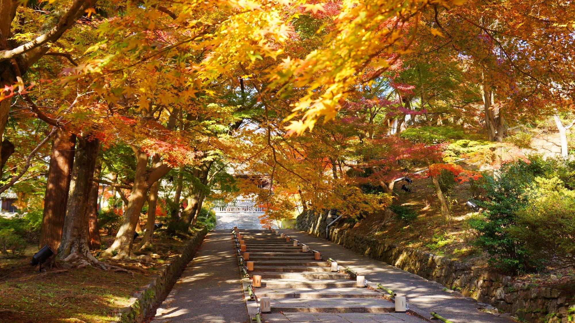 毘沙門堂の勅使門前の石段と華やかな紅葉
