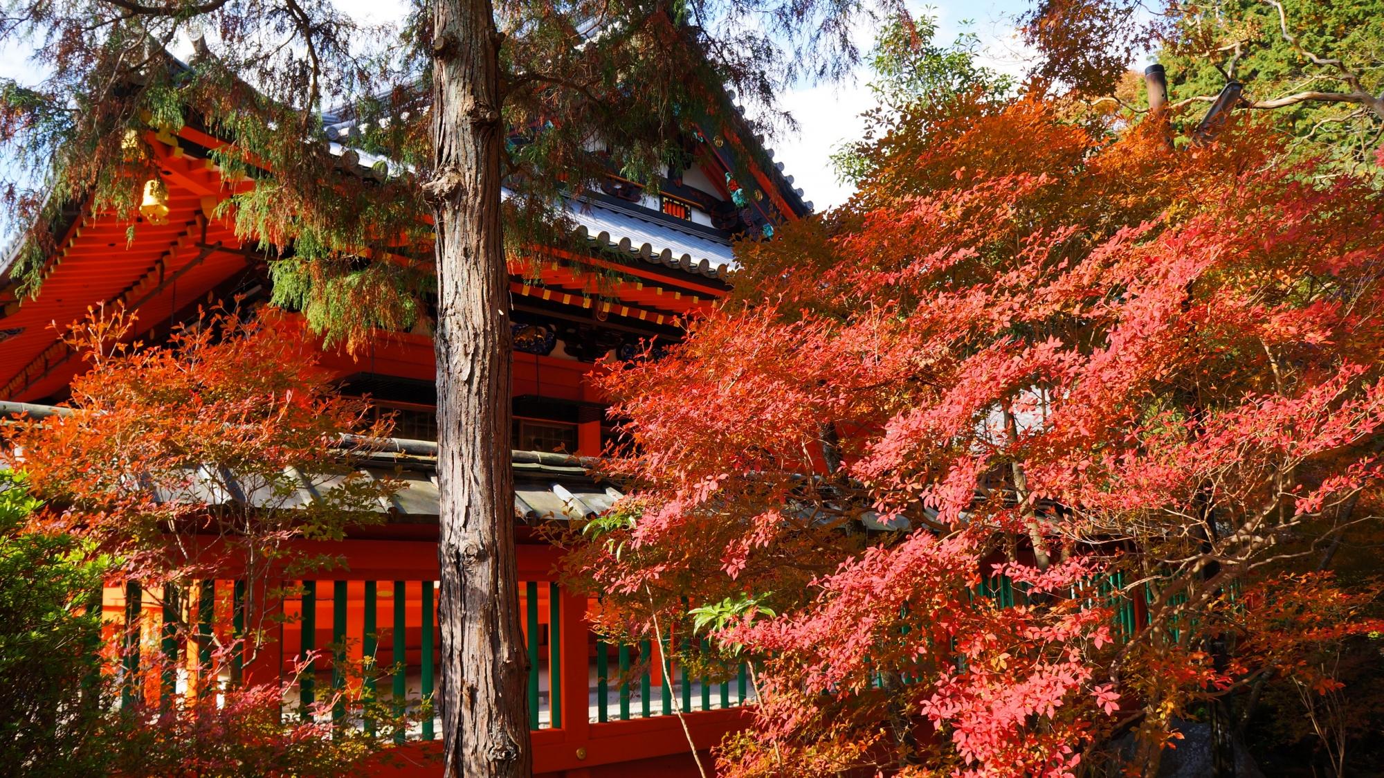 毘沙門堂の本堂横の溢れる鮮やかな紅葉