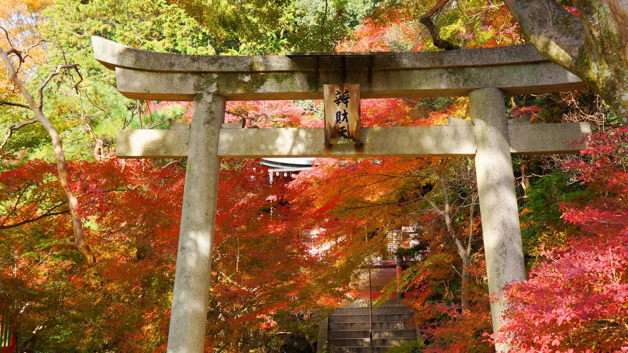紅葉に染まる鳥居の奥に佇む弁天堂