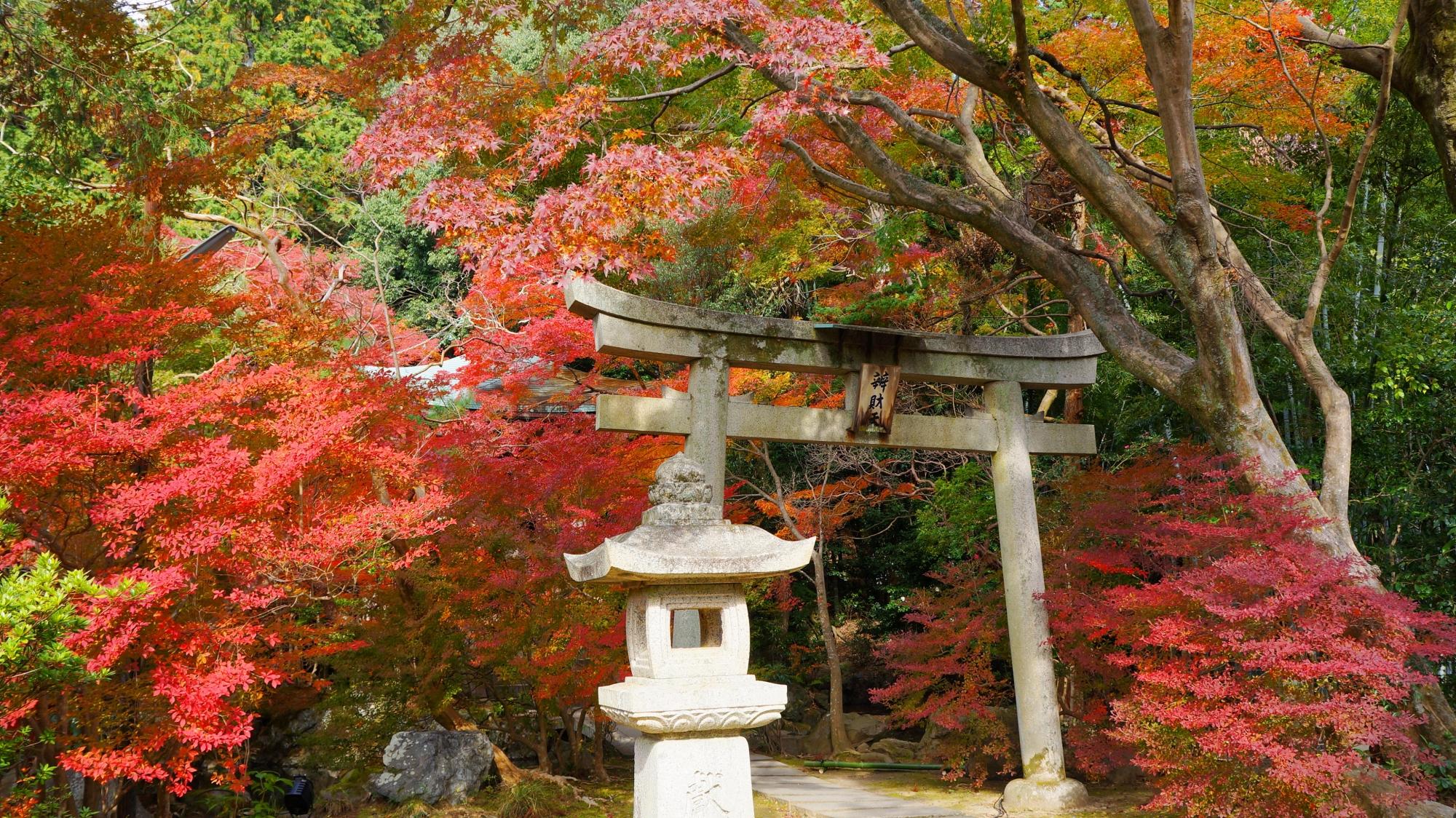 毘沙門堂の華やかな秋色の情景
