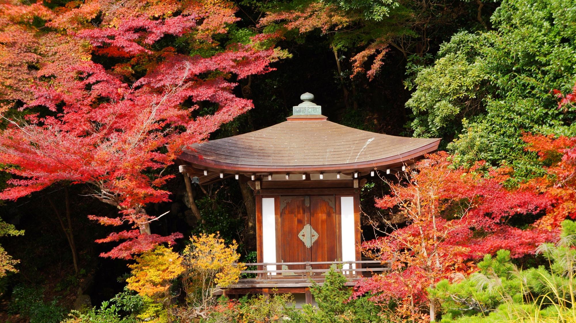 多彩な紅葉の中で凛として佇む小さなお堂