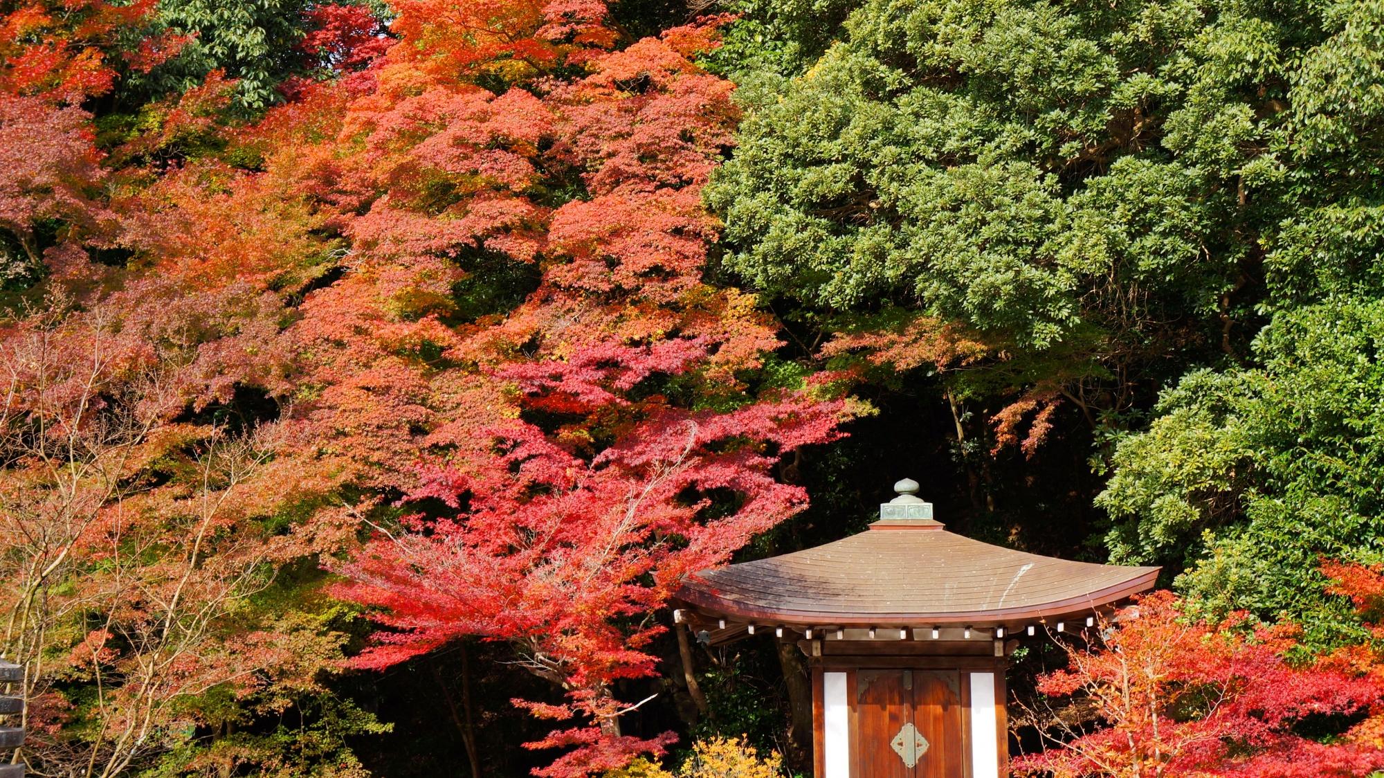 庭園をつつむ色とりどりの鮮やかな紅葉