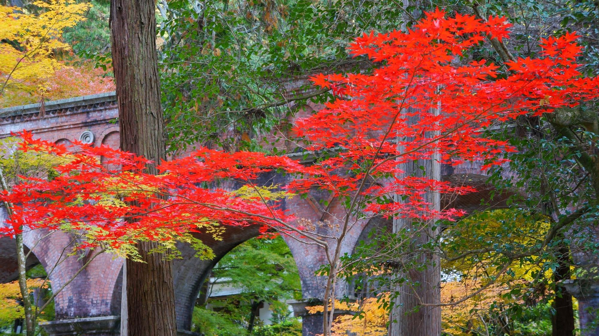 高画質 水路閣 紅葉 画像