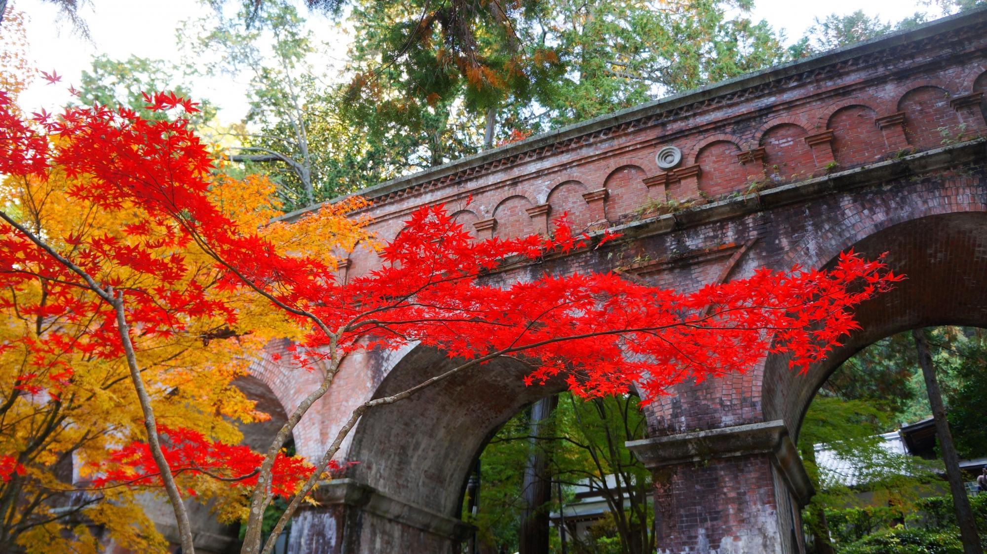 流れるように水路閣を彩る紅葉