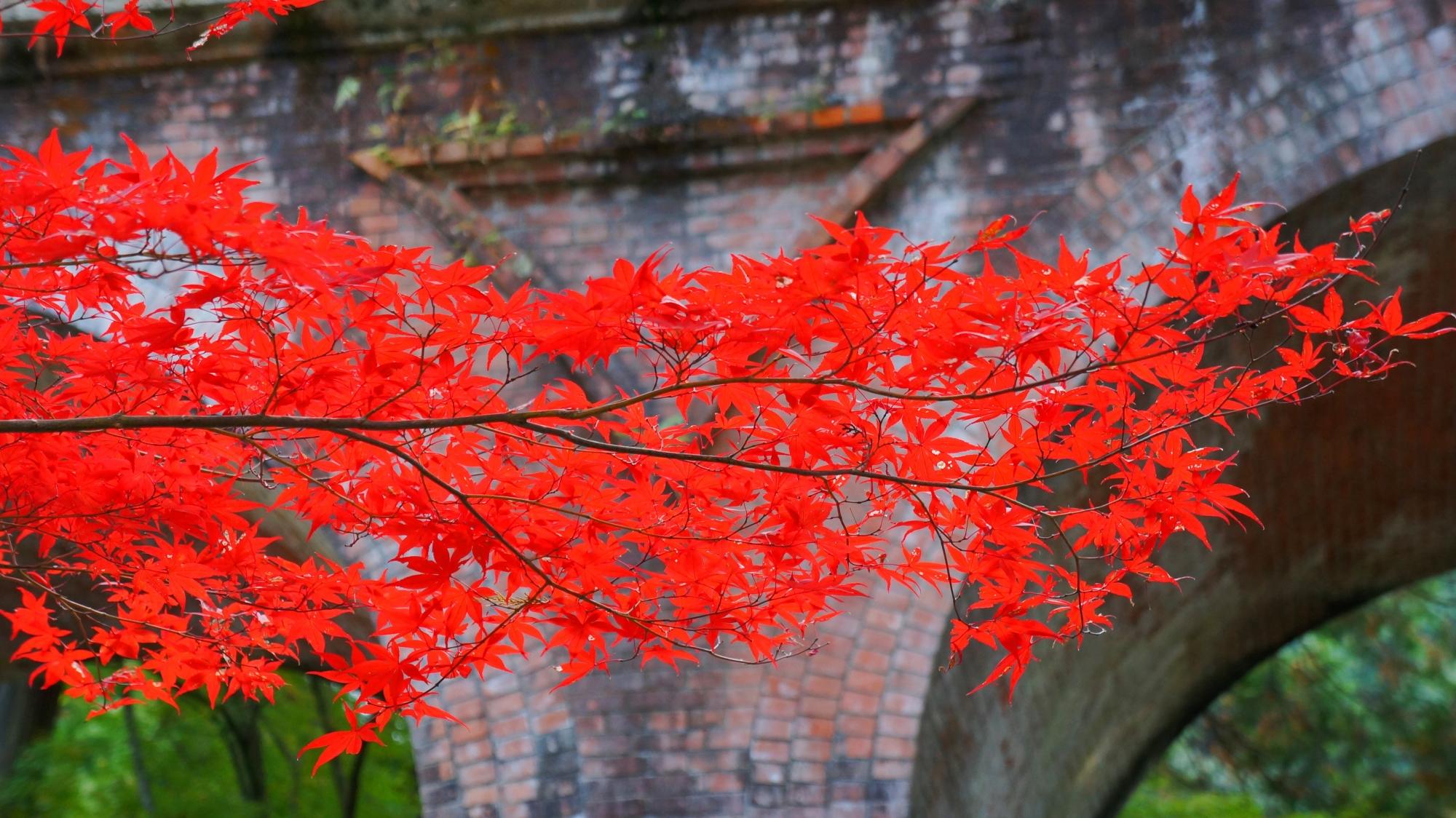 レンガ造りの上で浮かび上がりそうな色合いの赤い紅葉