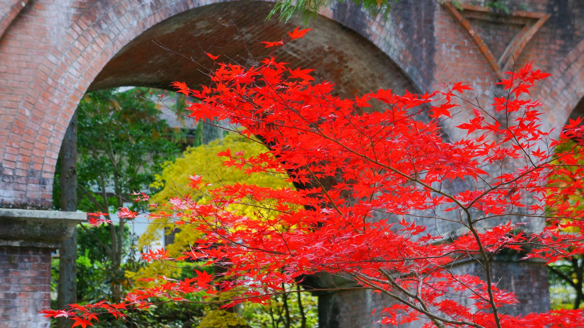 水路閣 高画質 紅葉 写真