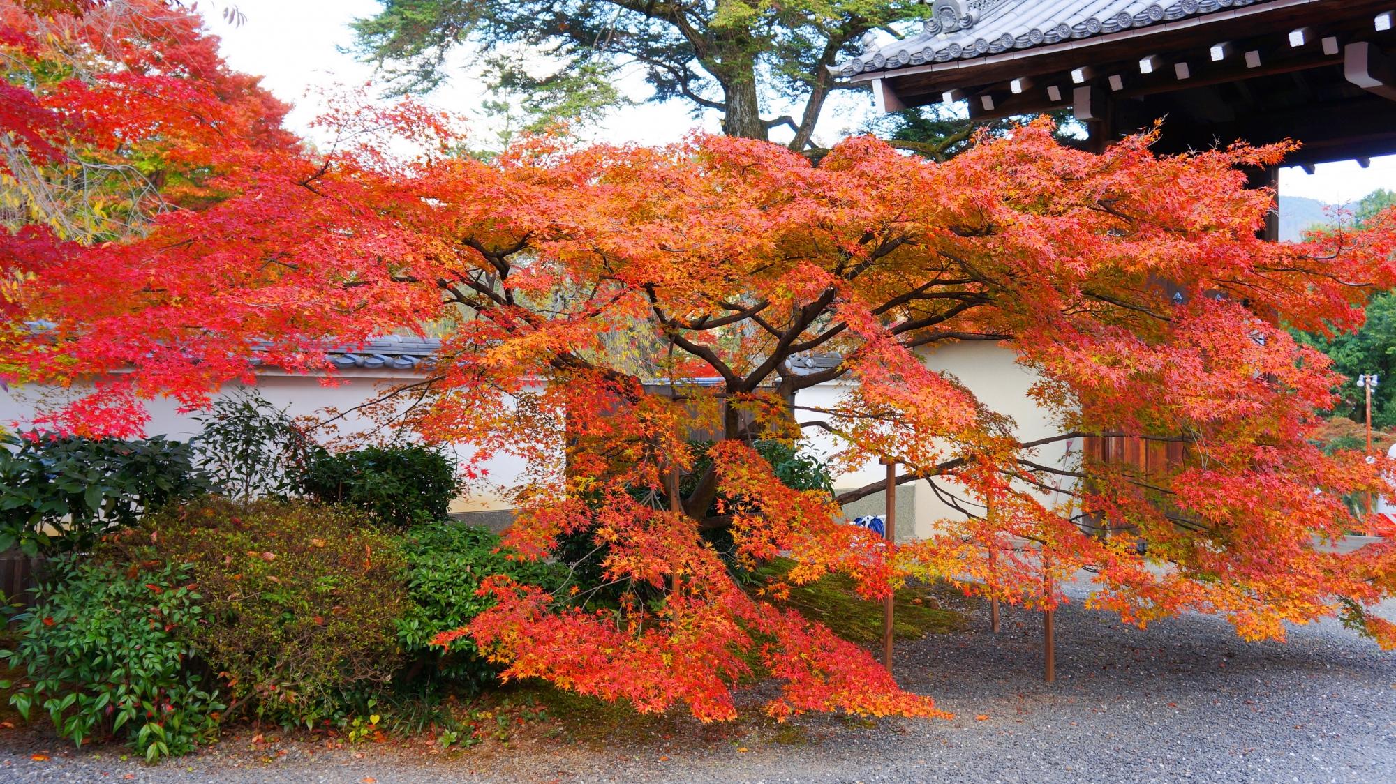 周囲をつつむように華やぐ紅葉