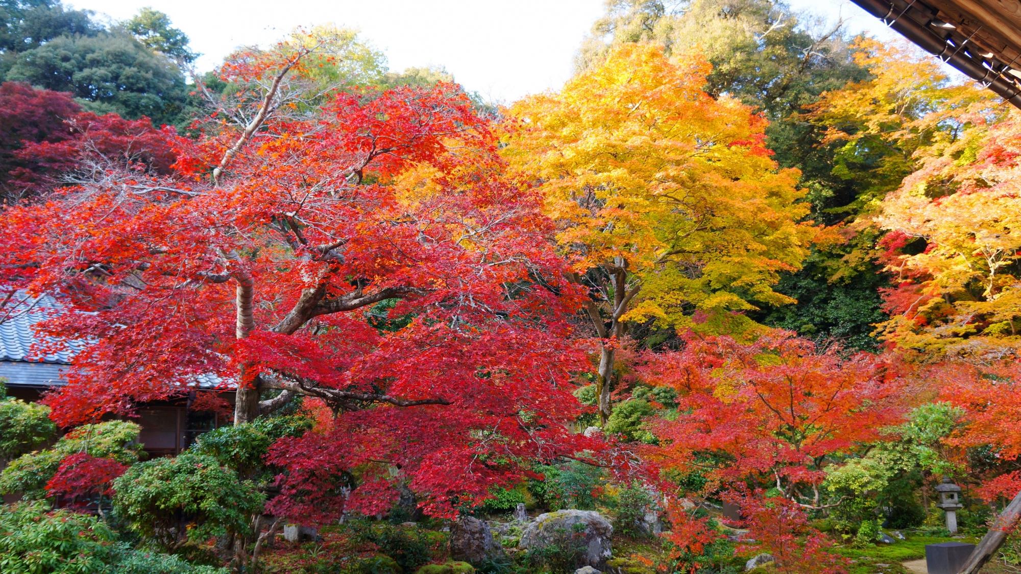 実相院の客殿前に広がる池泉式庭園の紅葉
