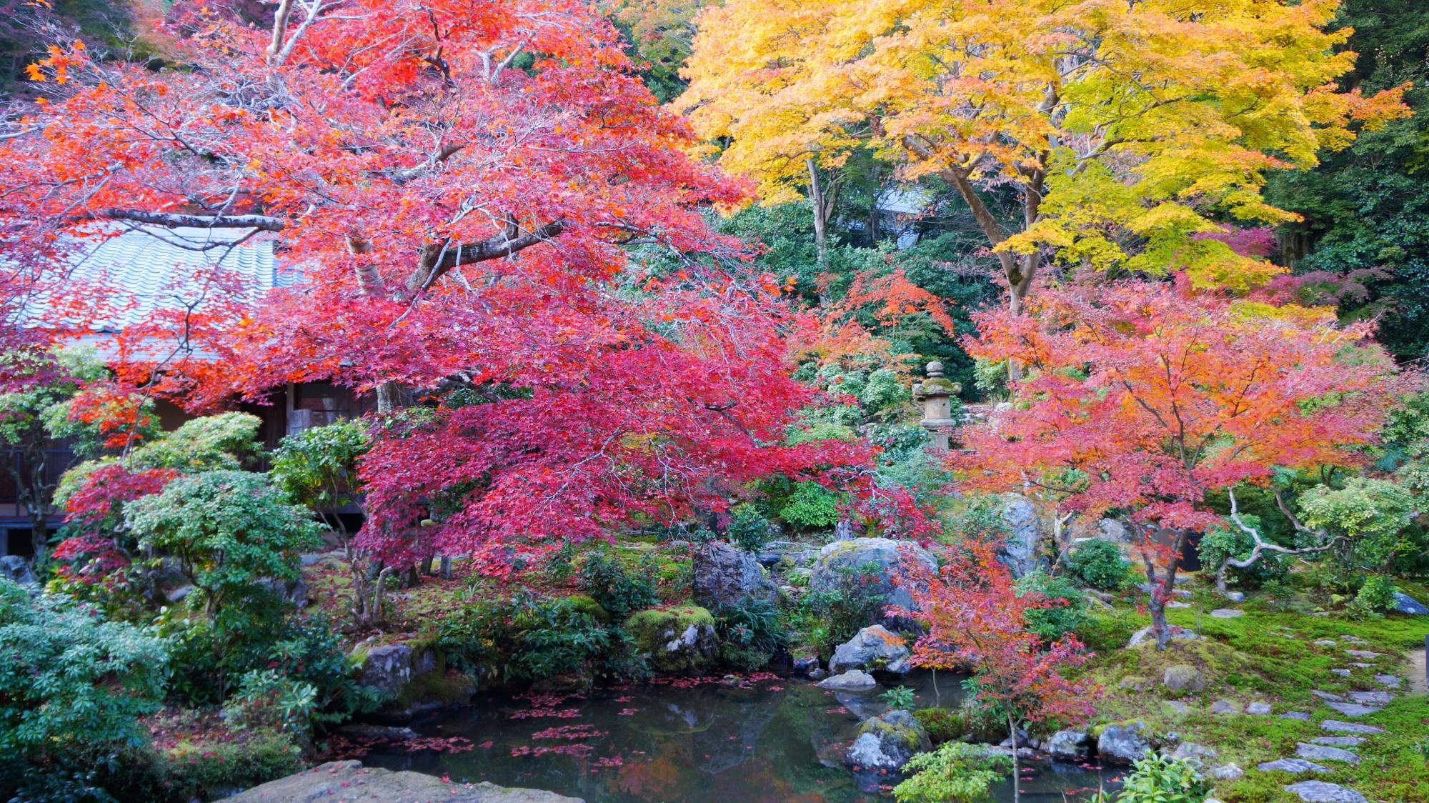 水と緑の豊かな庭園で溢れる多彩な紅葉