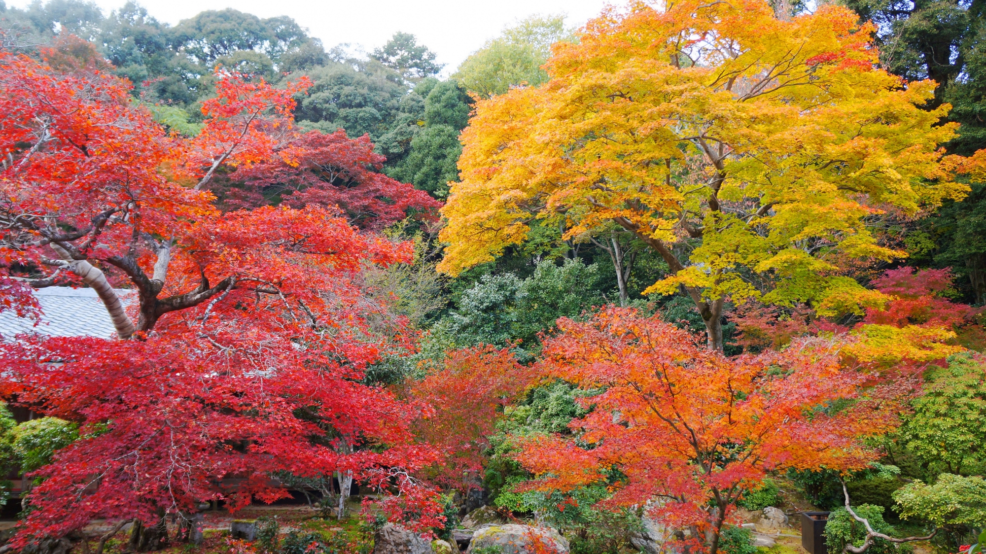 秋の庭園を染める華やかな黄色や赤色の紅葉