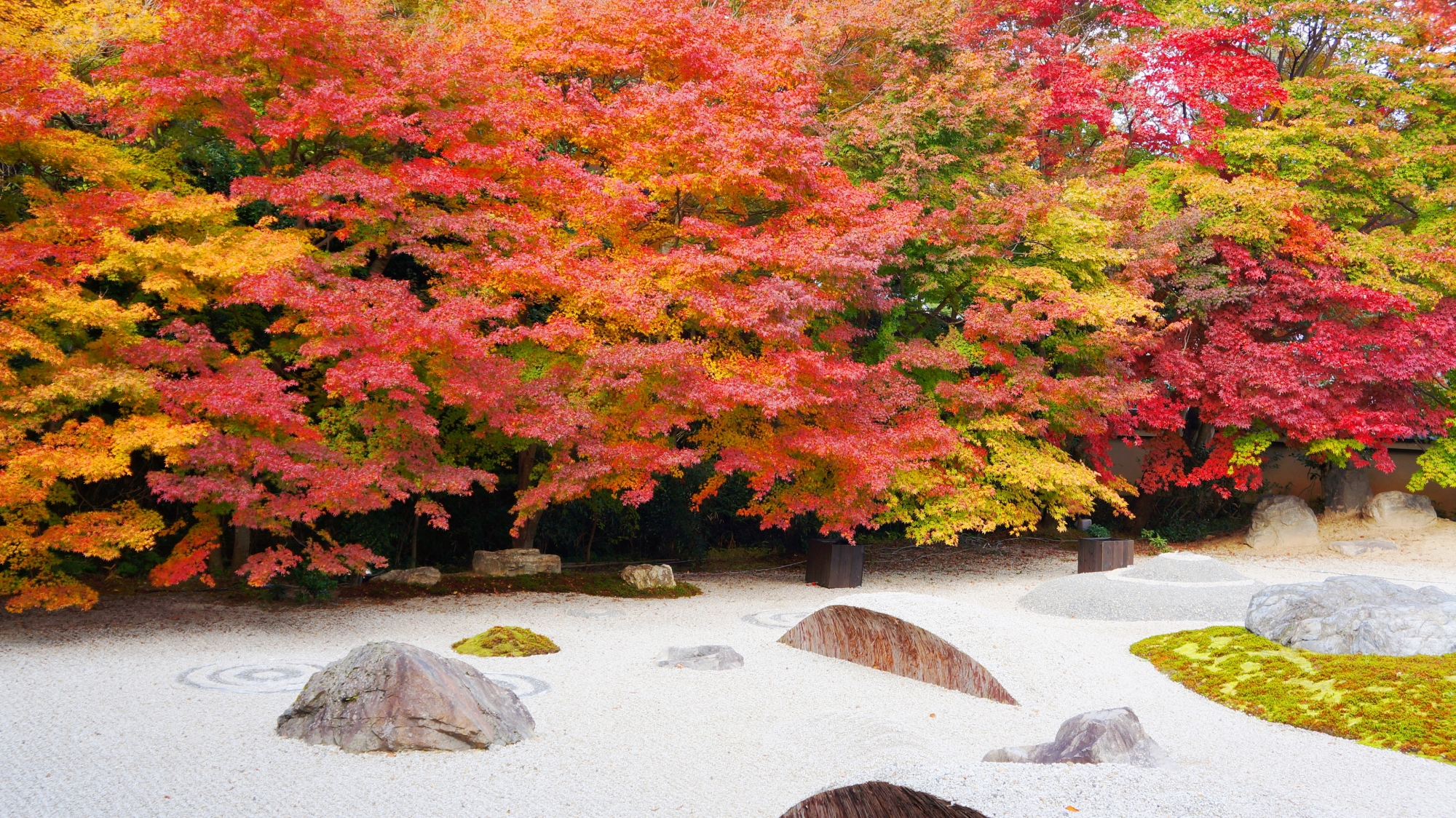 実相院石庭の白砂や苔を彩る多彩な紅葉