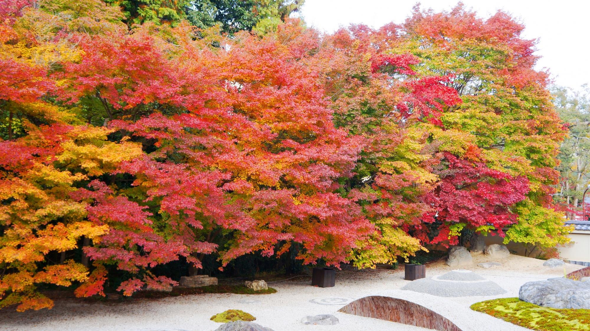 実相院の見事な紅葉と情緒ある秋の庭園