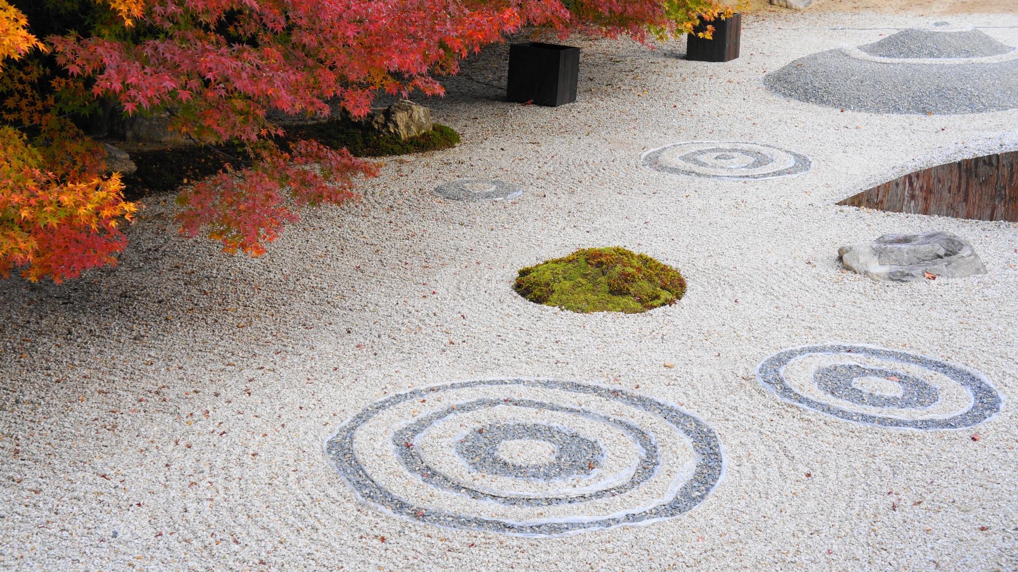 和やかな雰囲気もする実相院の秋の石庭