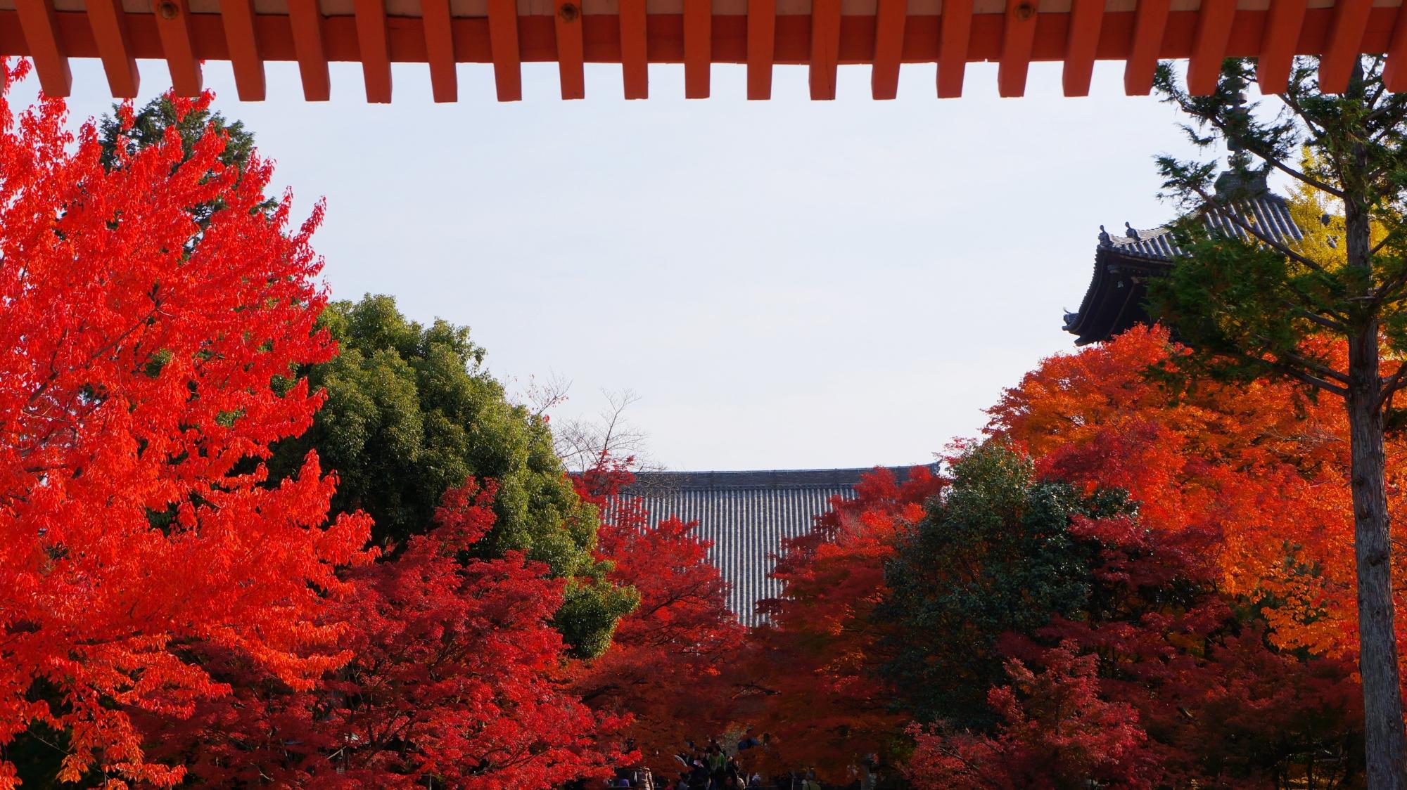 赤門と呼ばれる総門の下から眺めた境内の紅葉
