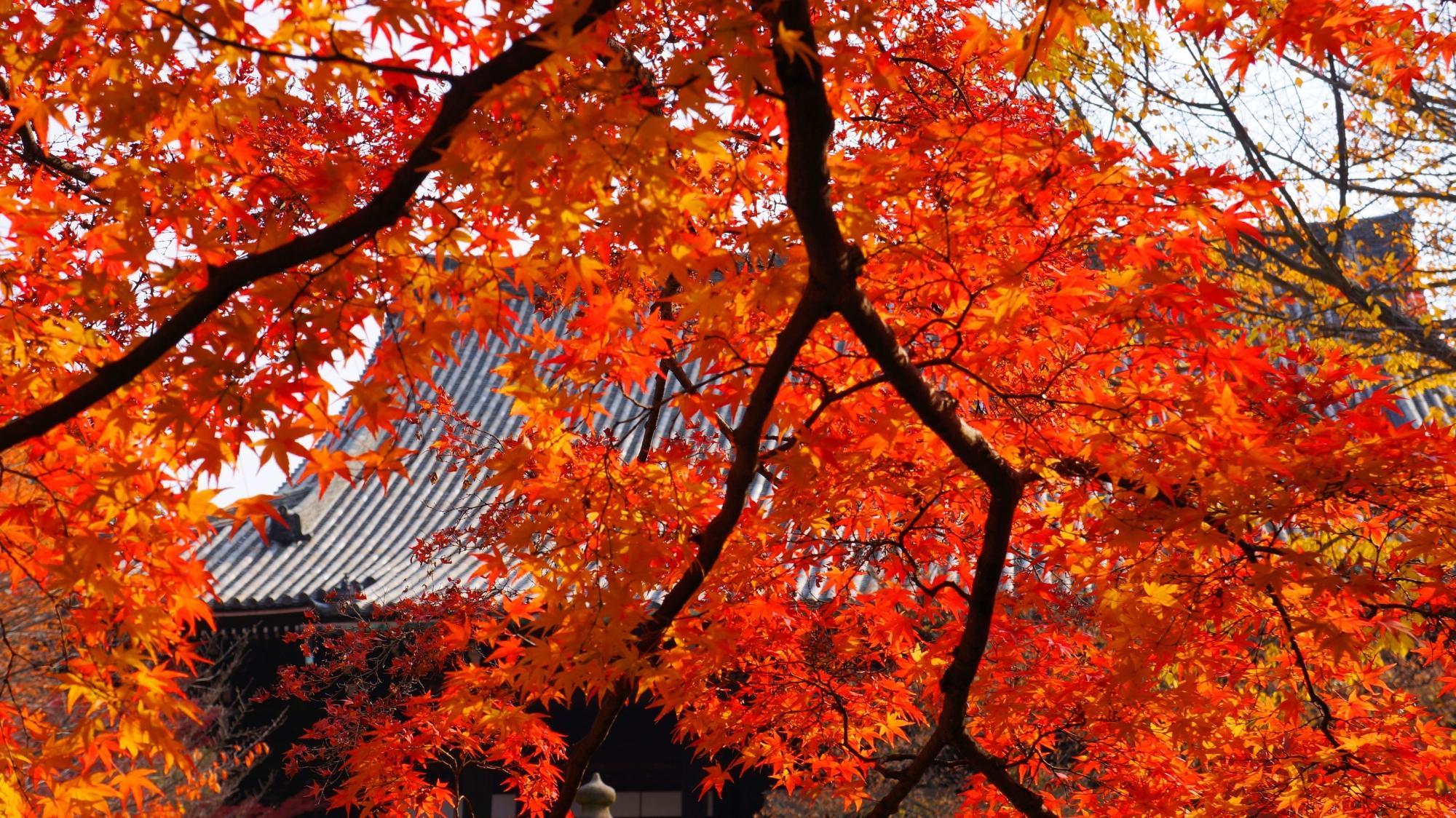 真如堂の本堂と煌びやかな紅葉