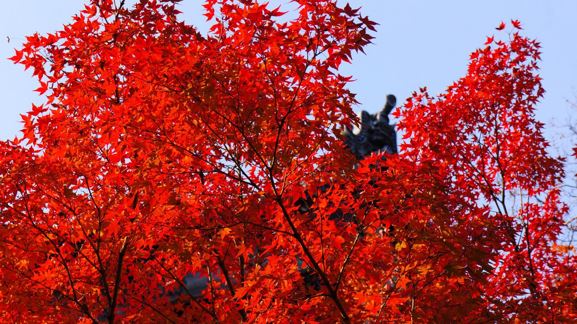 本堂を鮮やかに染める真っ赤な紅葉