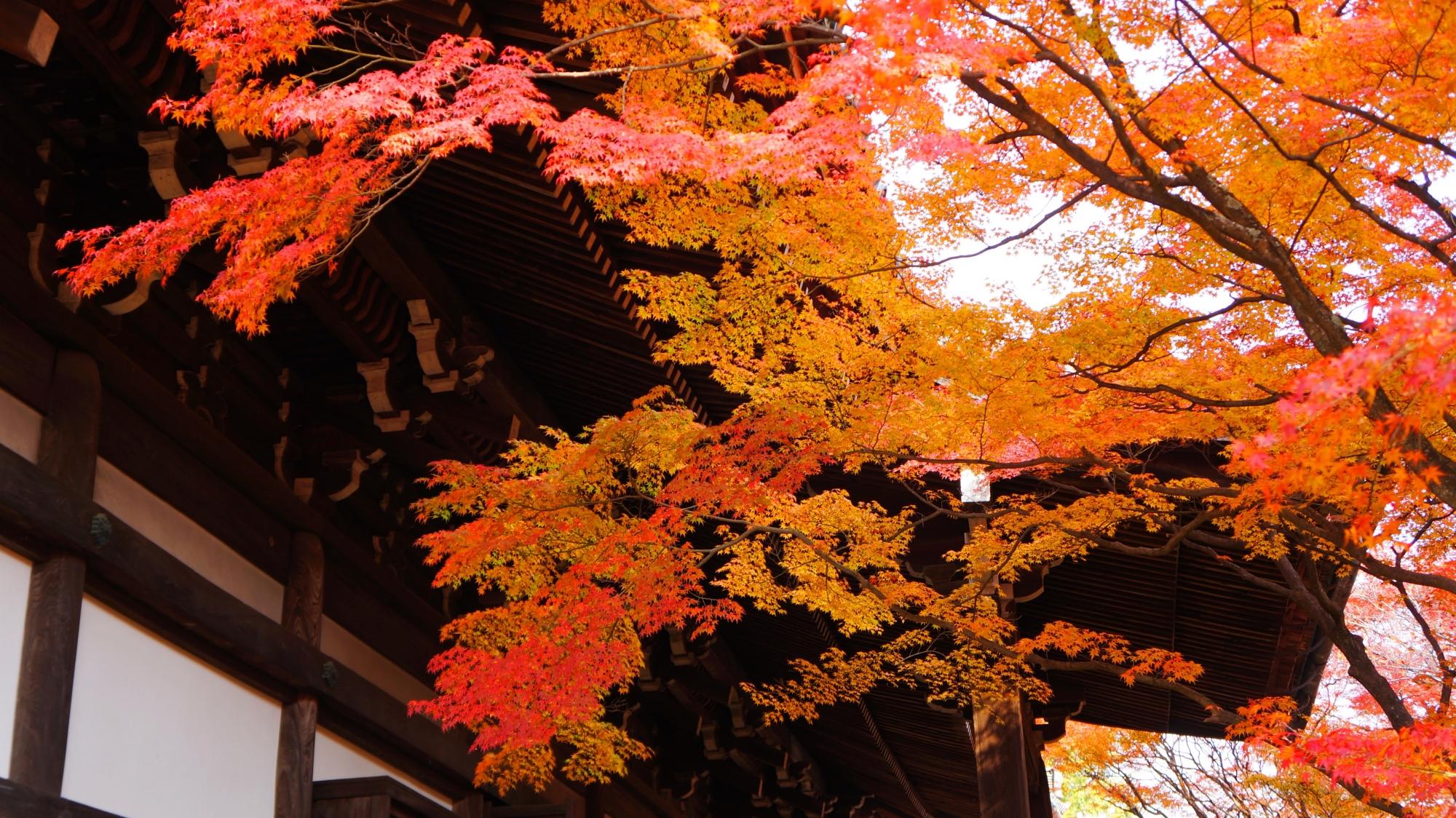 淡く暖かな秋色につつまれた本堂裏