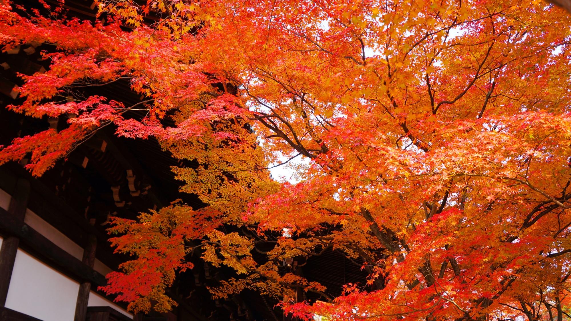 美しすぎる華やかな秋の空間