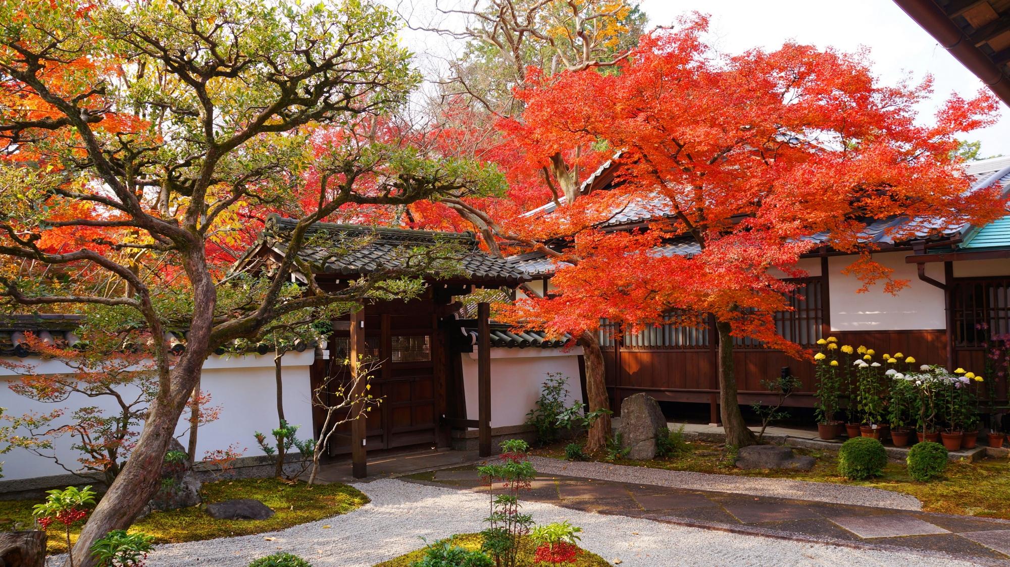 紅葉が鮮やかに色づく真如堂の涅槃の庭